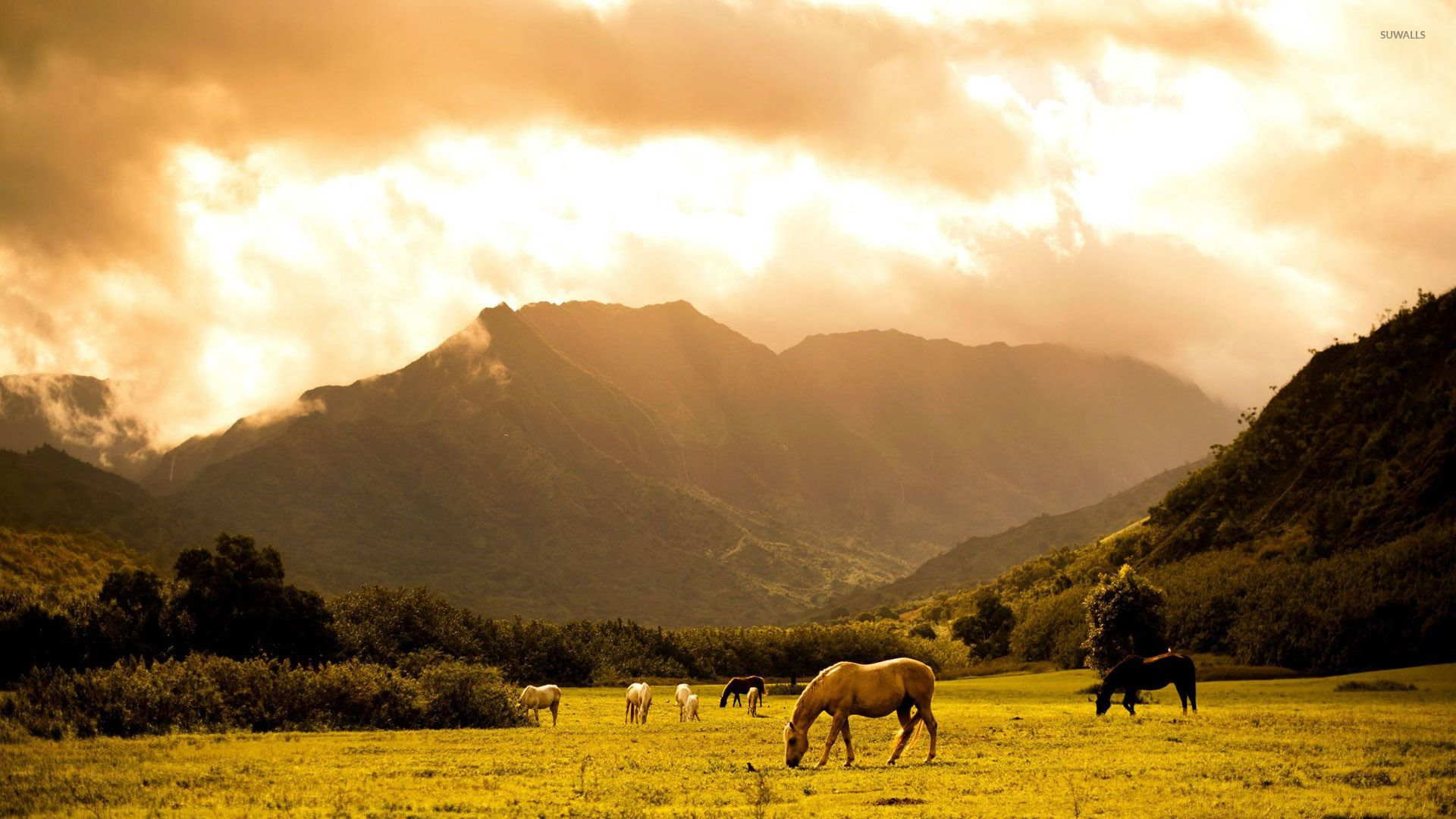 beautiful horse images