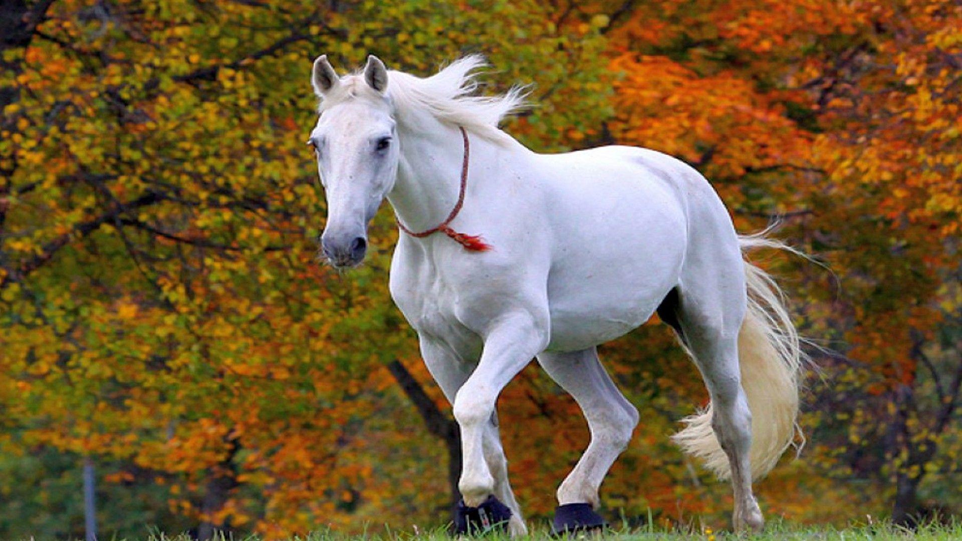 horses desktop background