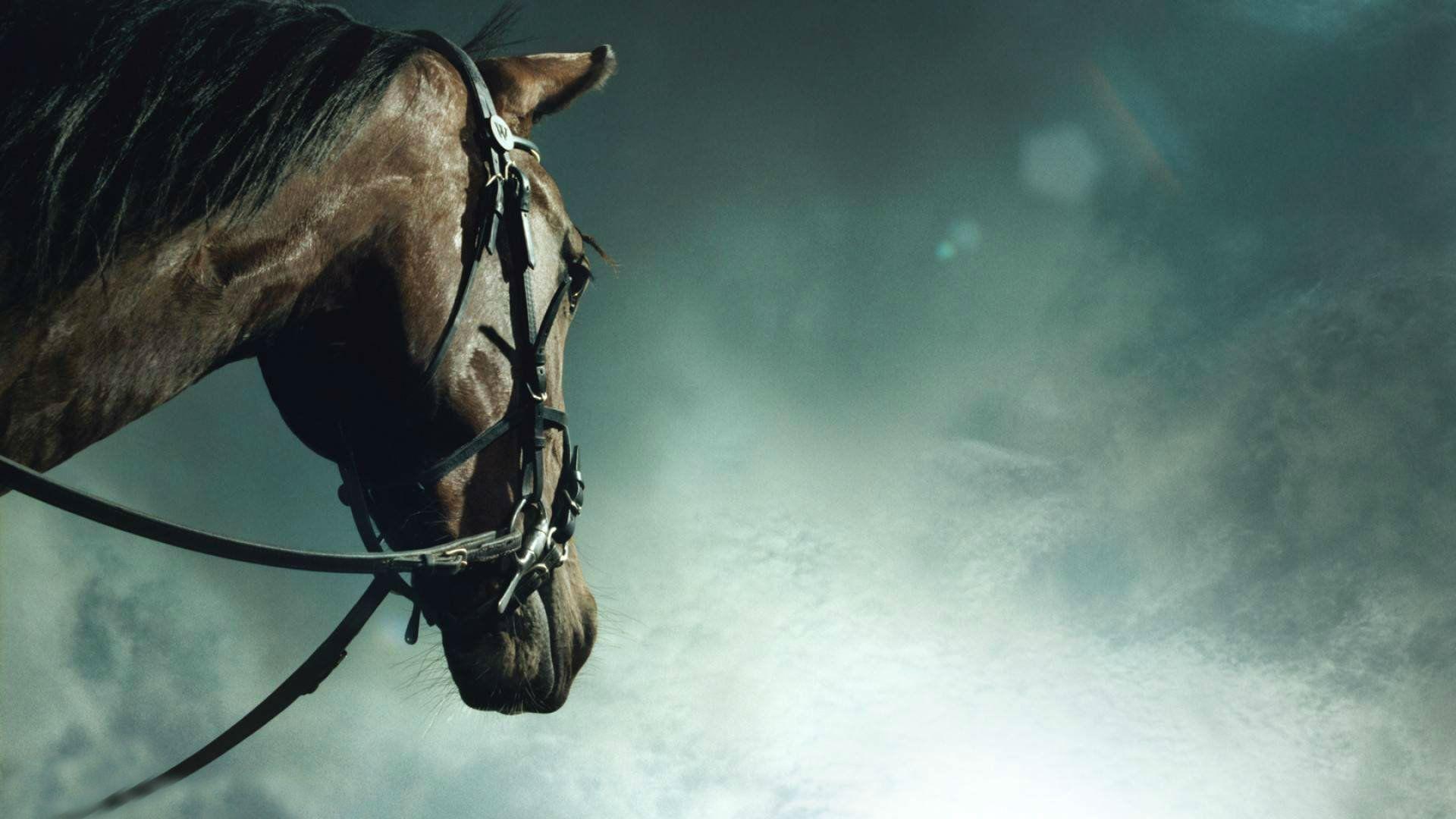 pretty horses wallpaper