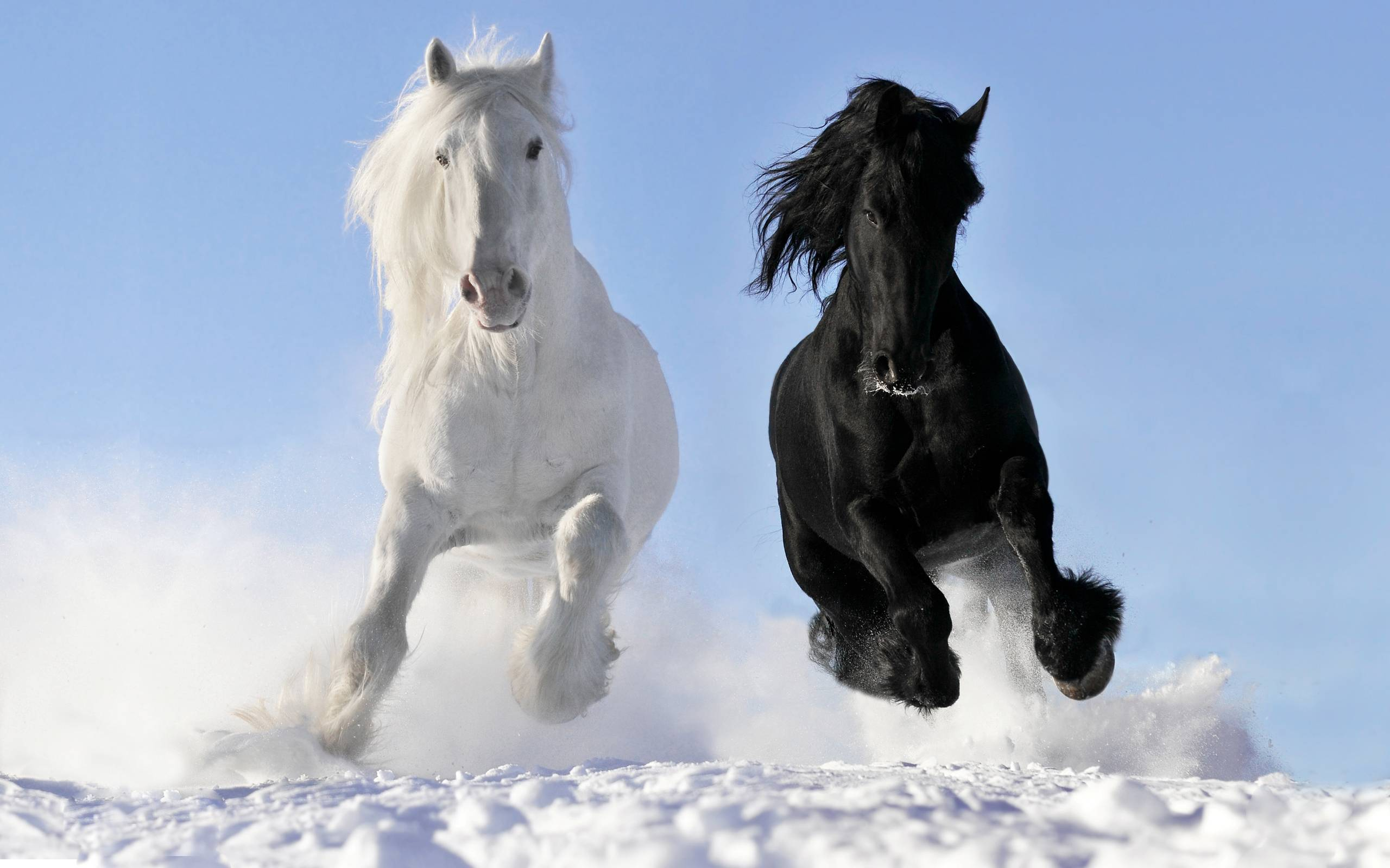 horse backgrounds for computers