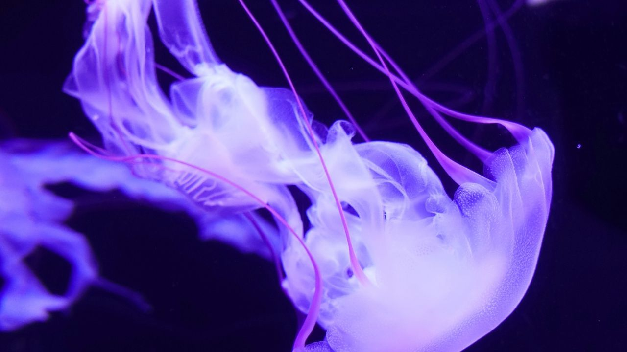 images of jellyfishes