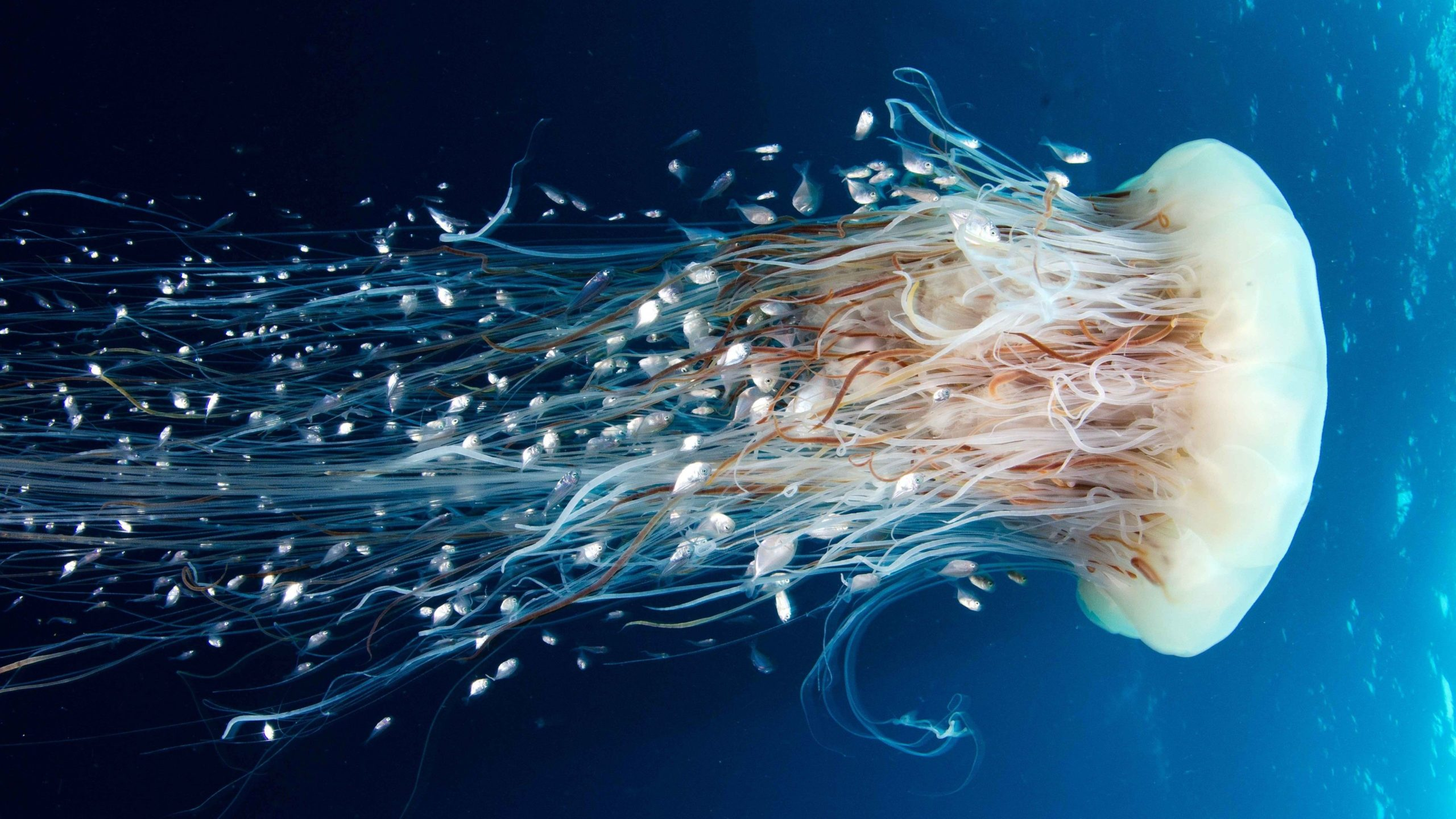 photos of jellyfish