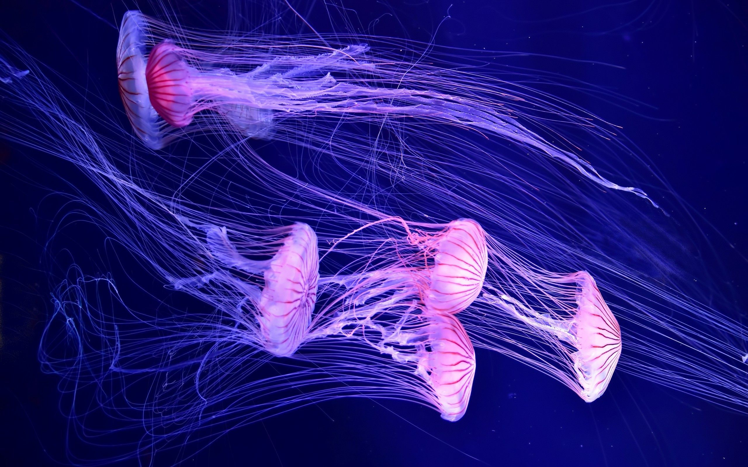 show me a picture of a jellyfish