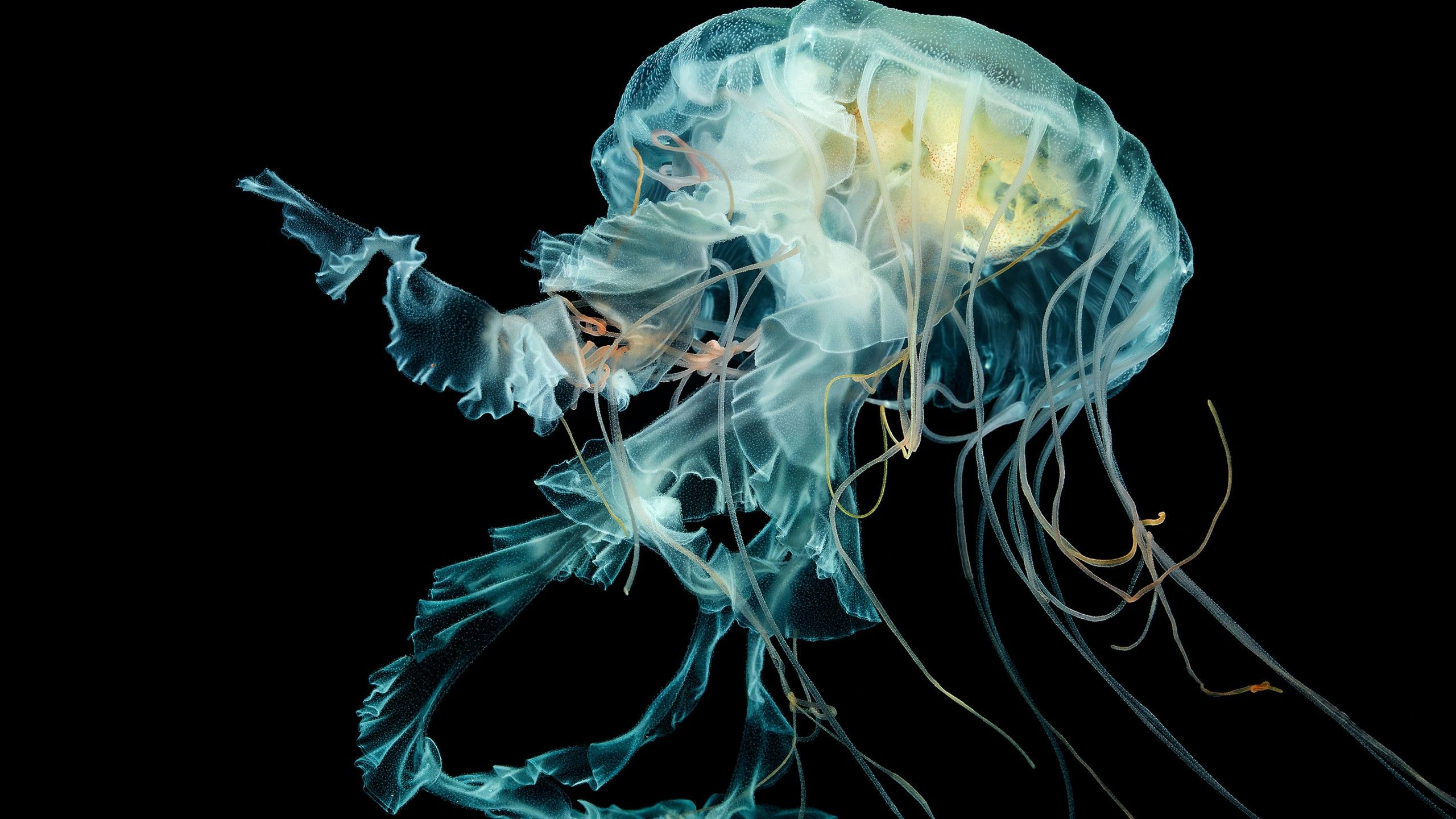 a picture of a jelly fish