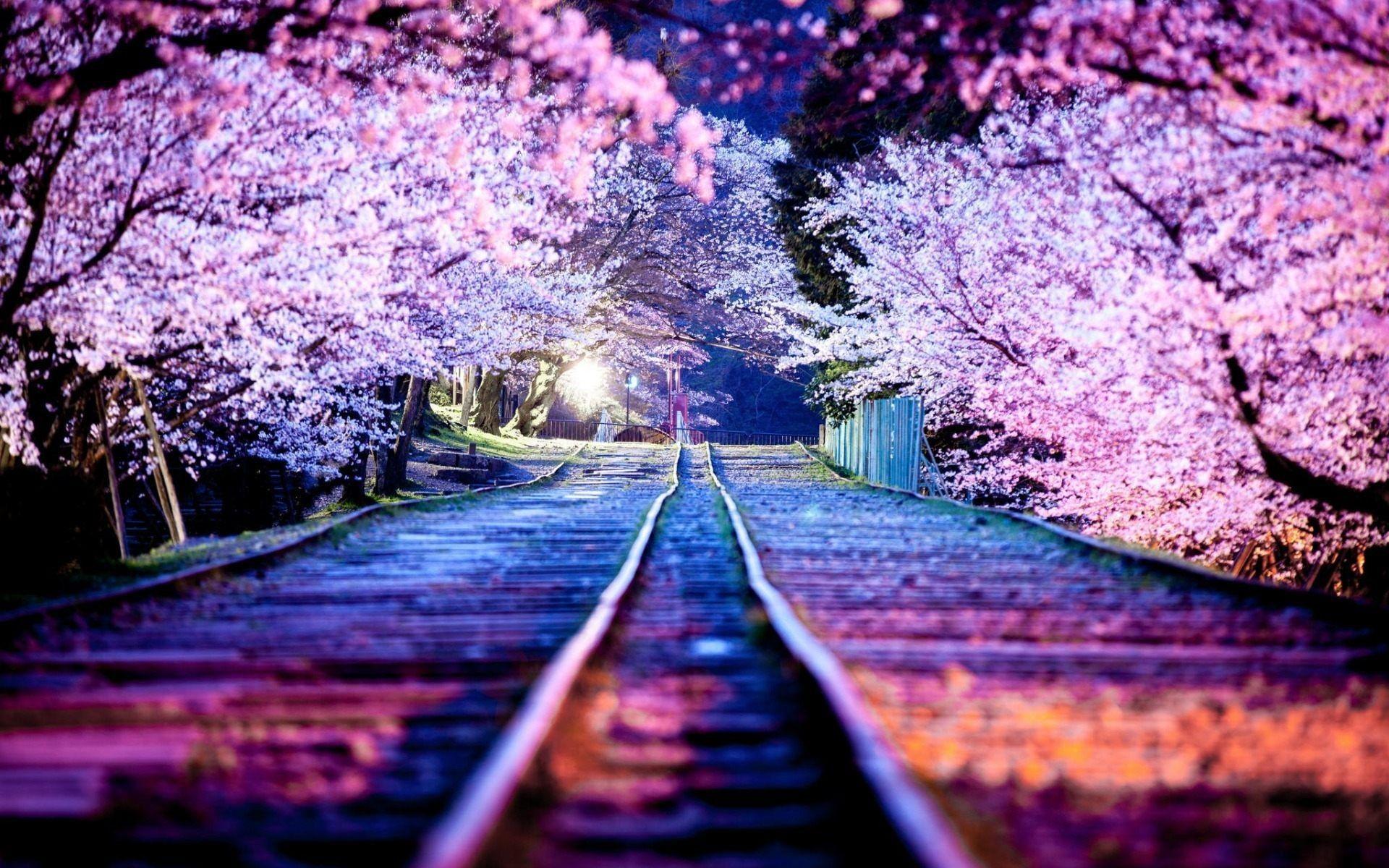 kyoto download photos