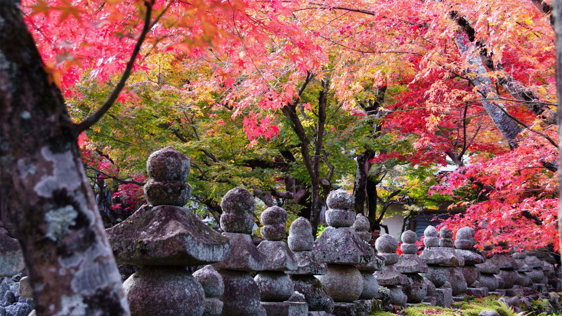 pictures of kyoto 4k