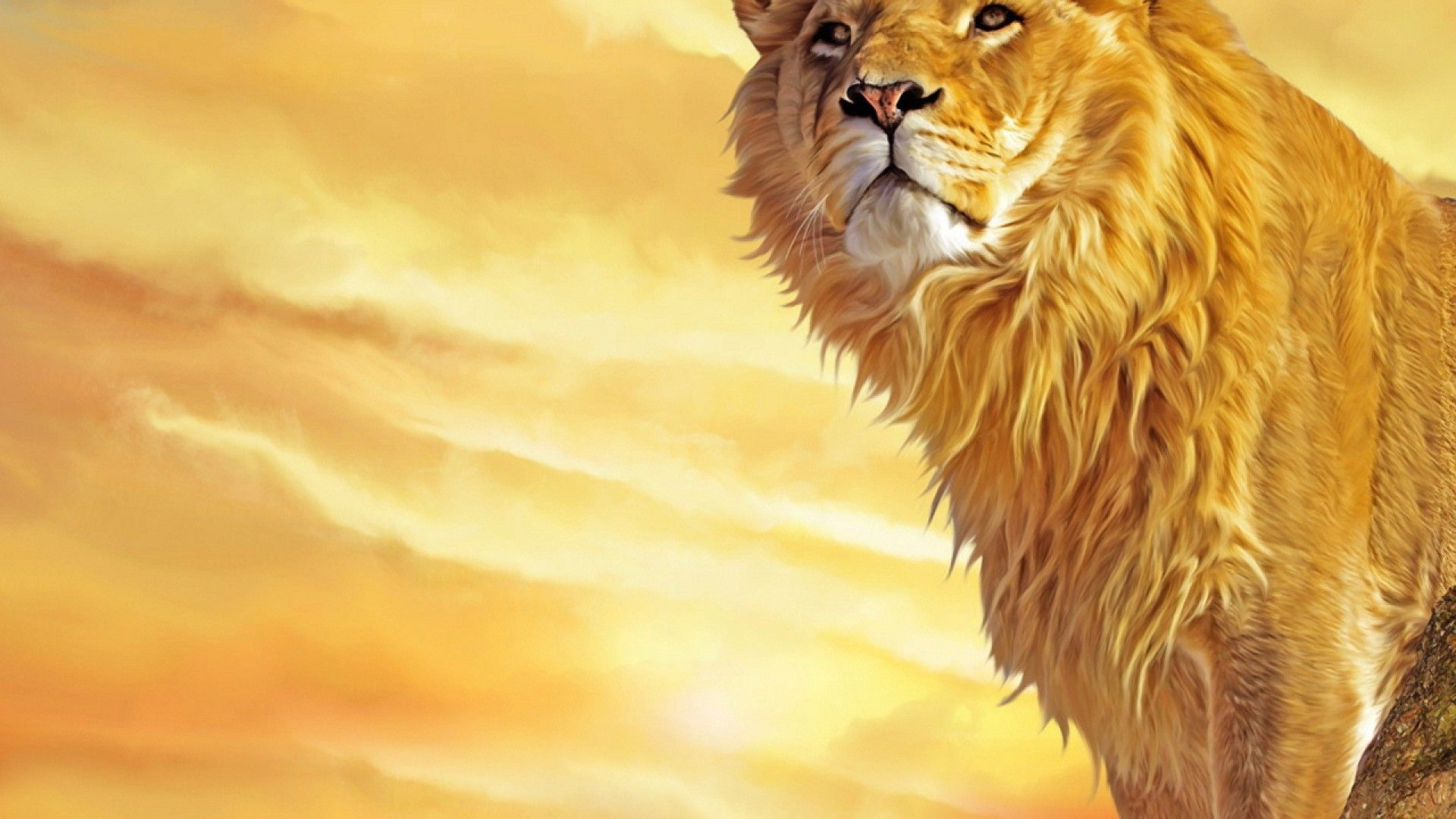 lion wallpapers free download