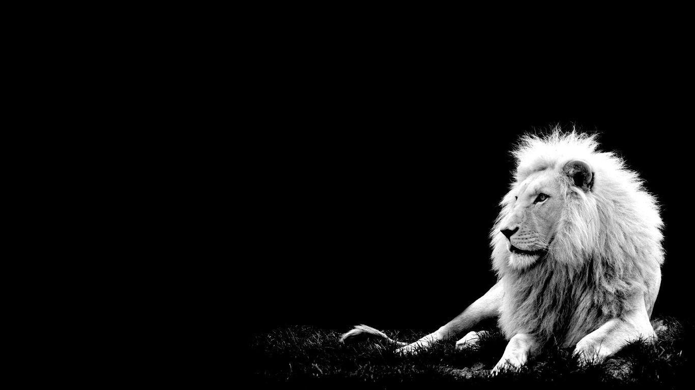 lion image free download