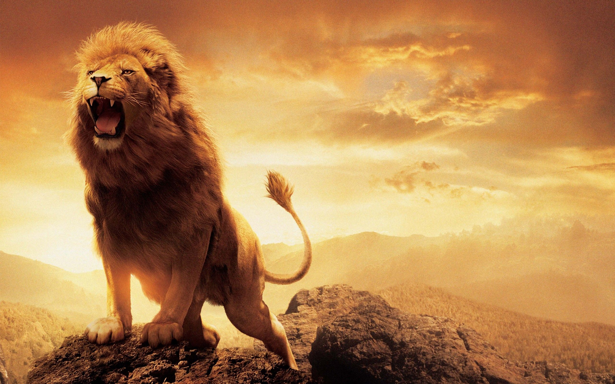 lion images hd download
