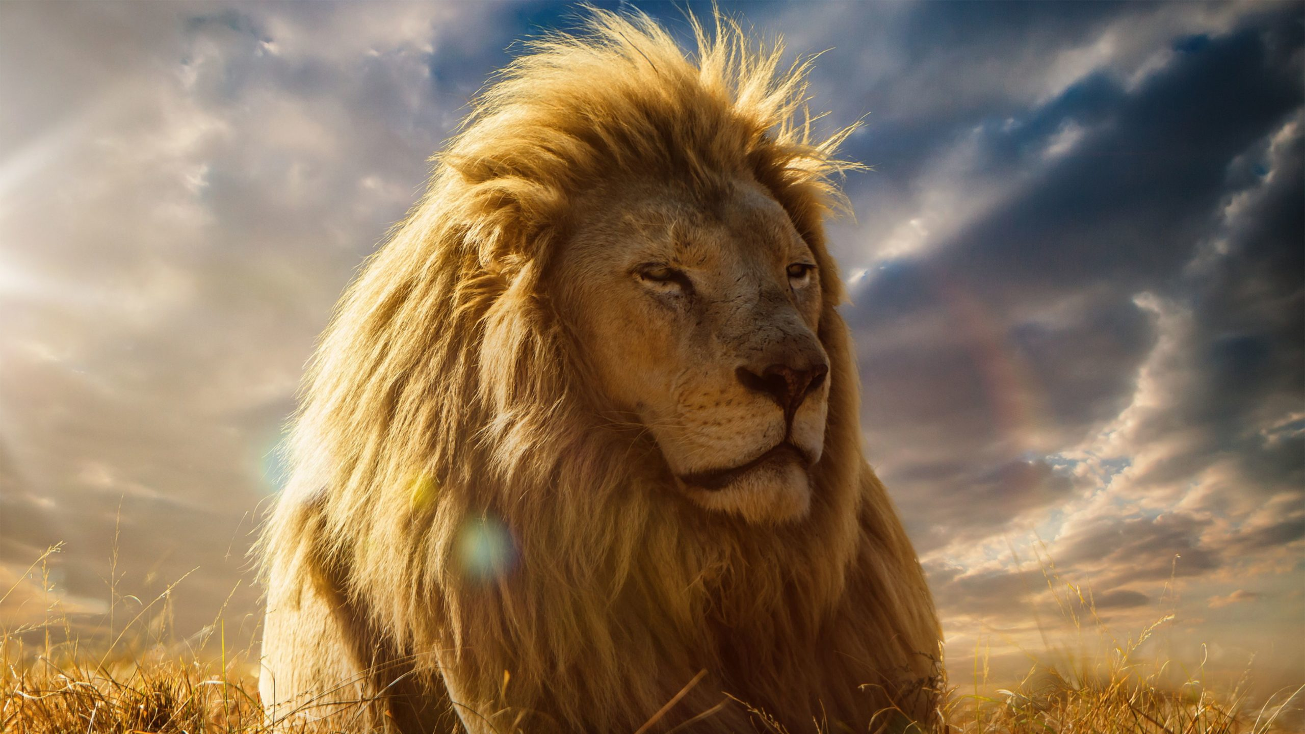 hd lion wallpapers 1080p