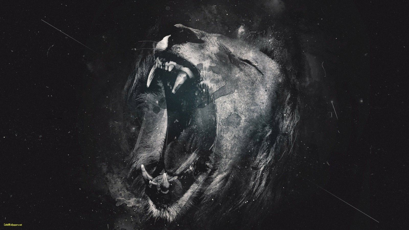 lion photo wallpaper