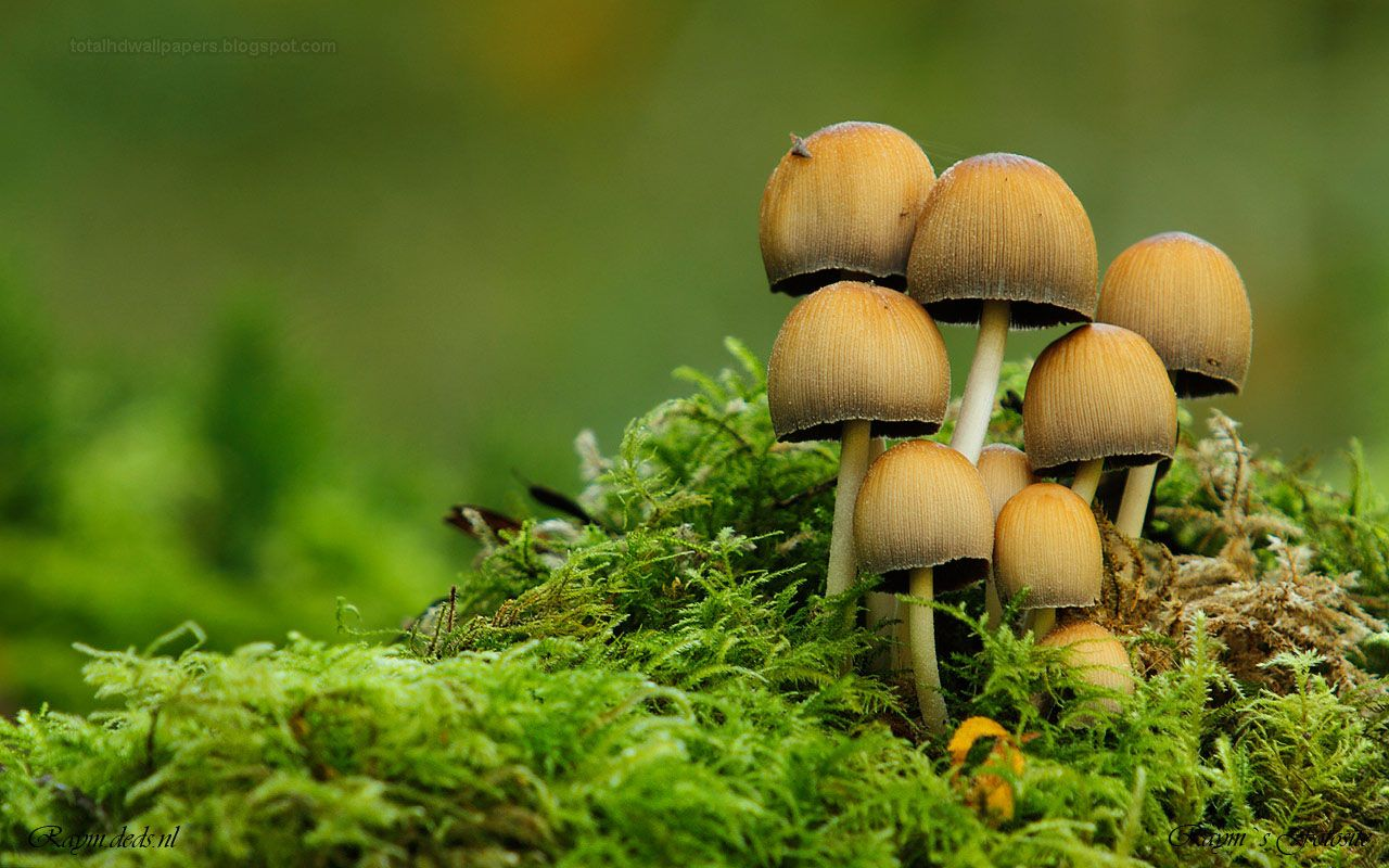 pictures of a mushrooms
