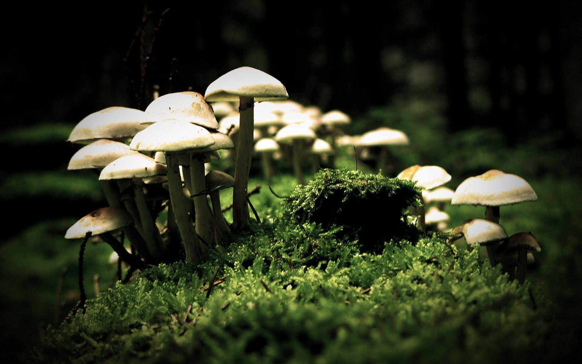 mushroom pictures images