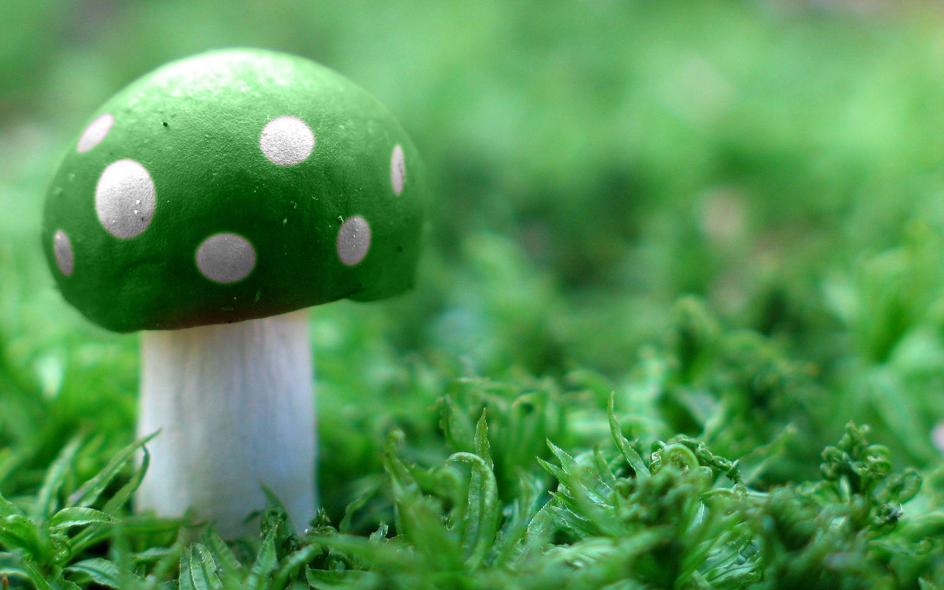 hd mushroom wallpaper