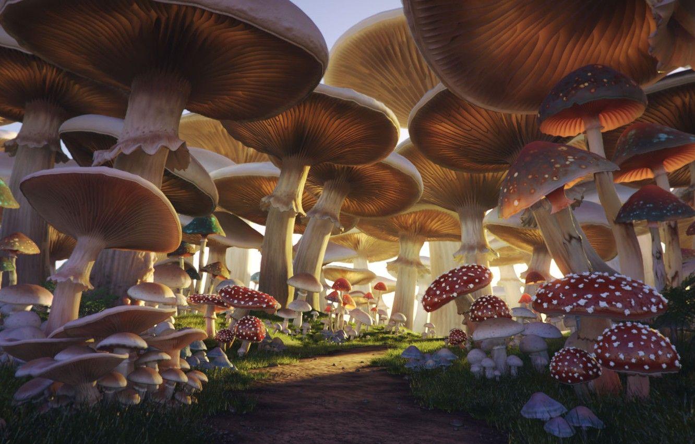 mushroom images free