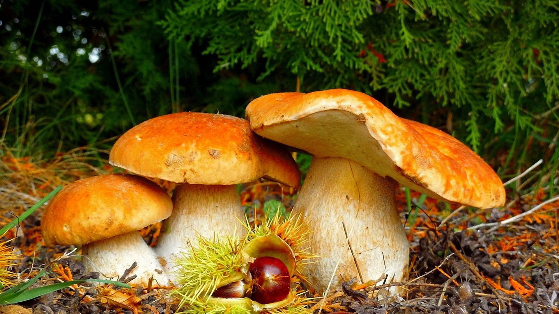 colorful mushroom pictures