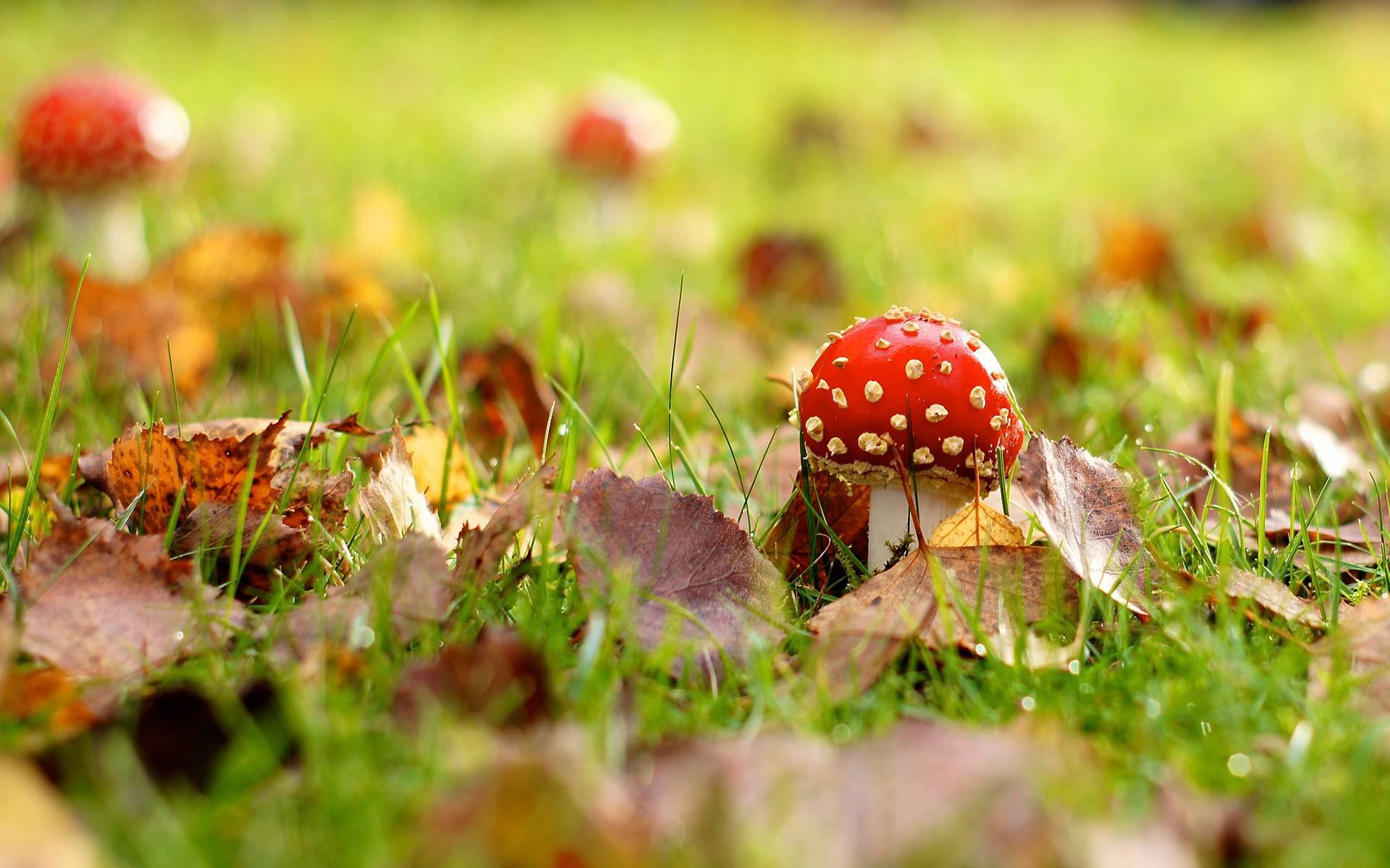 animated mushroom pictures