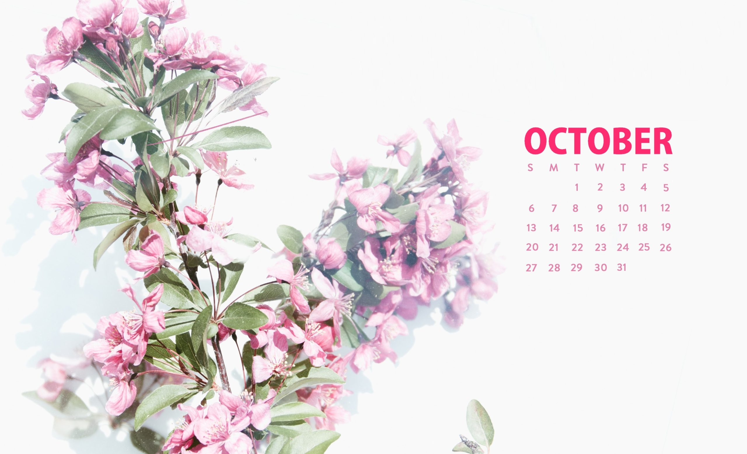 october wallpaper cute