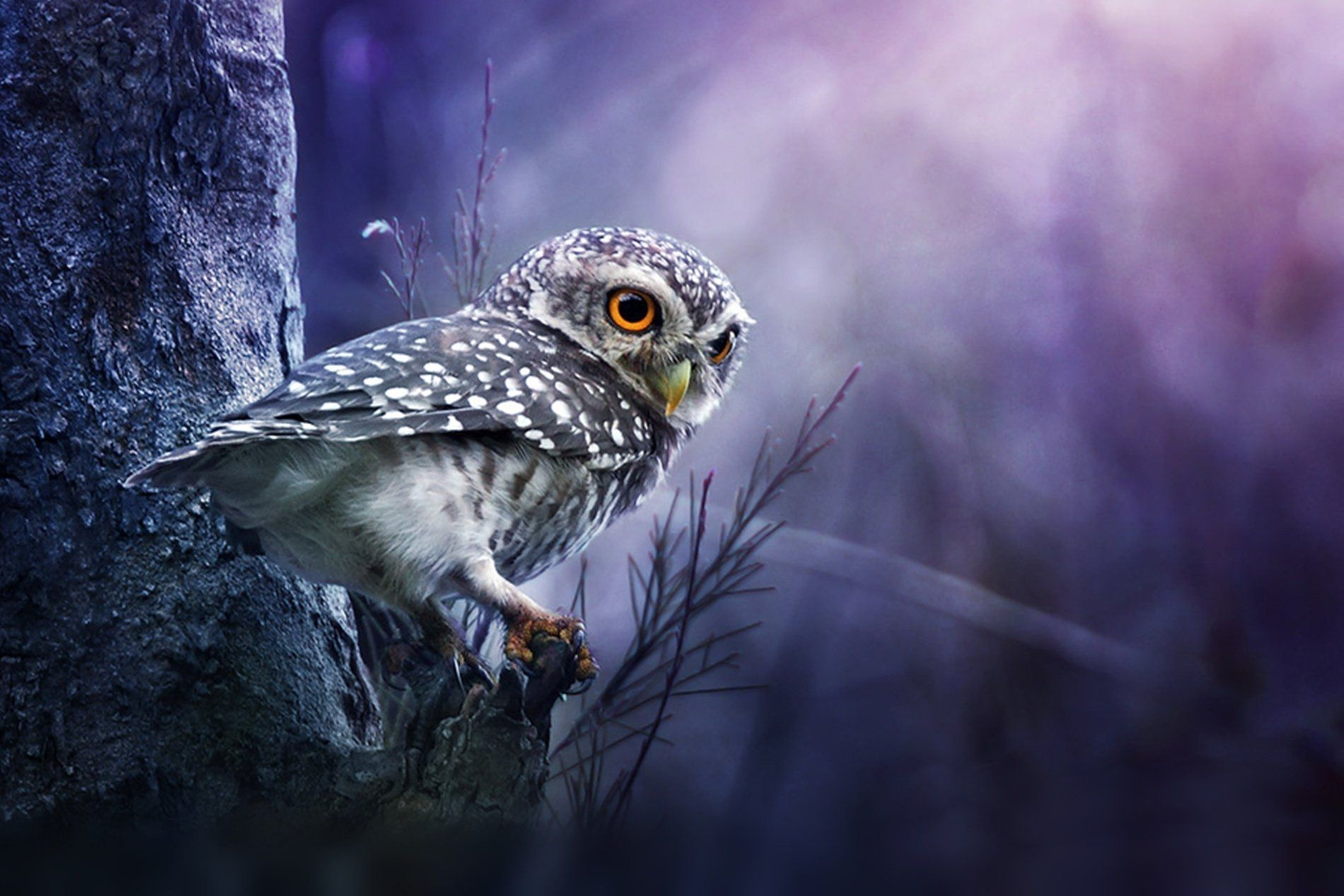 owl desktop wallpapers