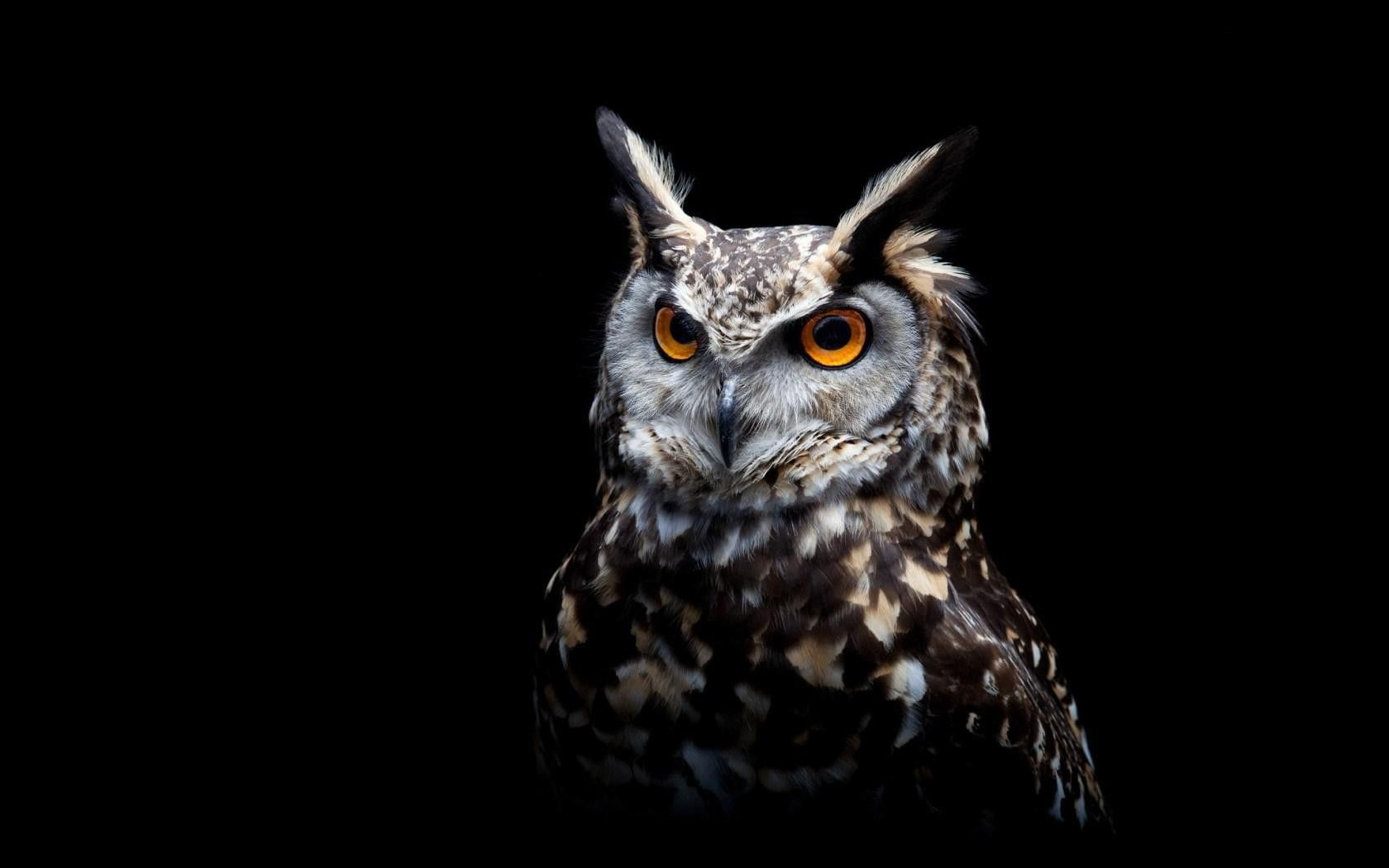 owl images free