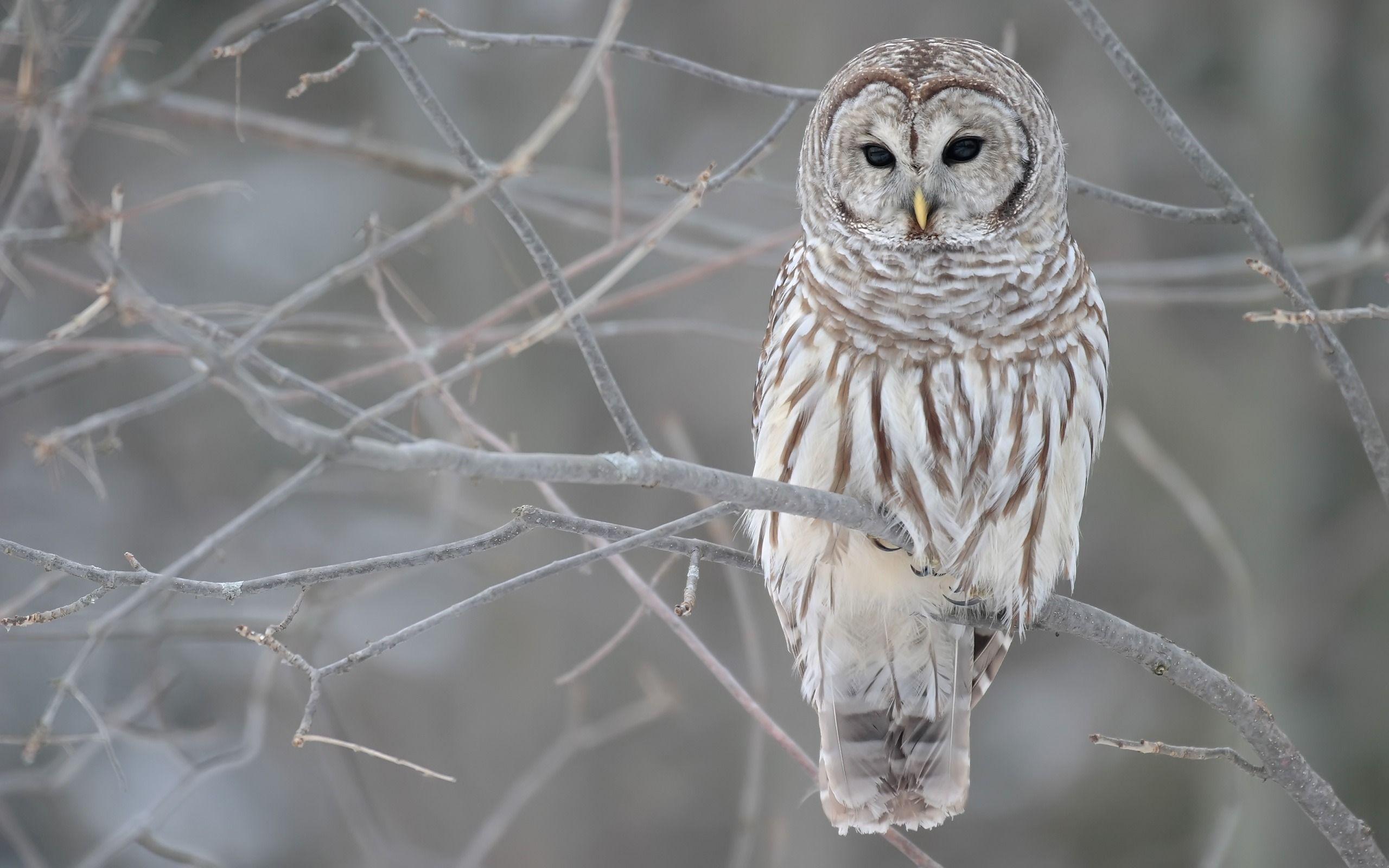 owl wallpaper iphone
