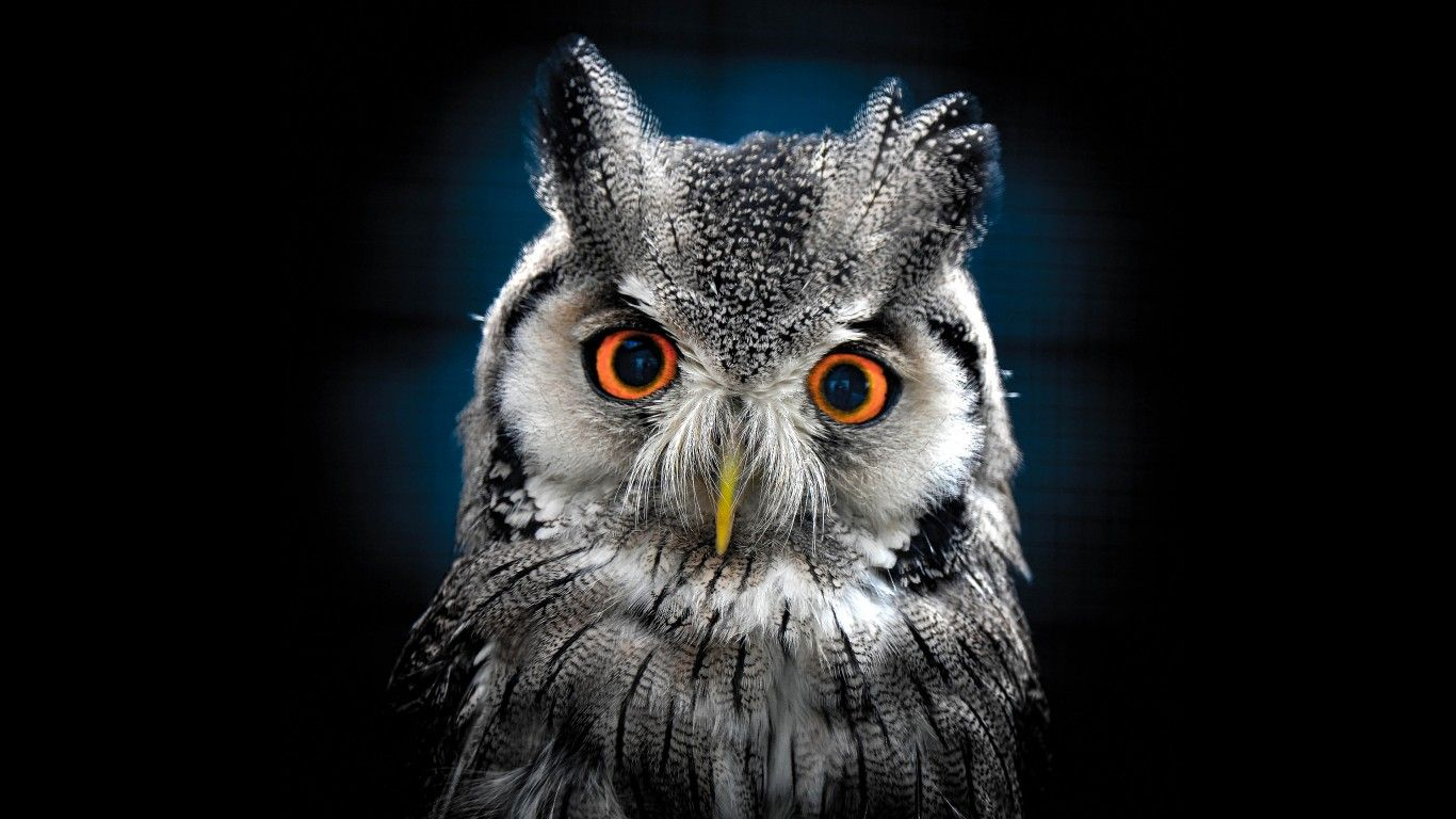 owl wallpaper for android