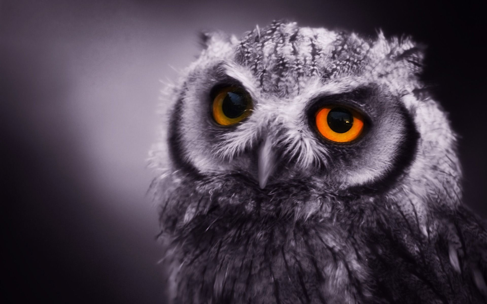 iphone wallpaper owl