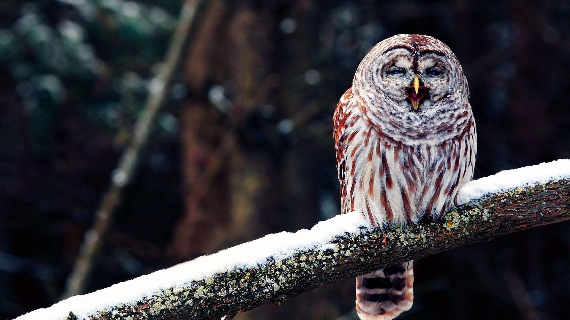 owl wallpaper for phone