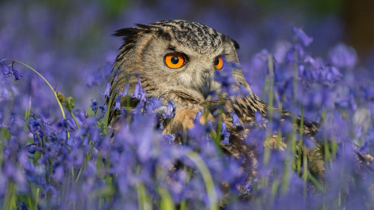 free pictures of owls