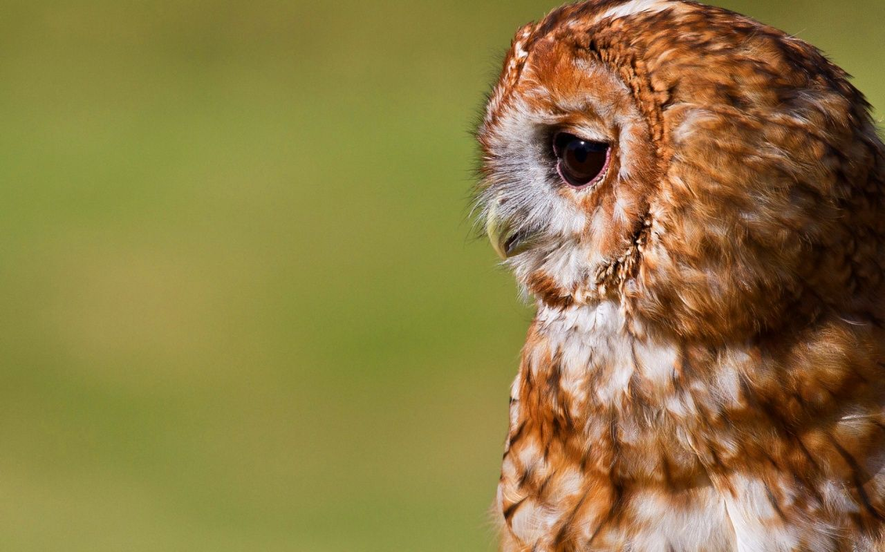 owl wallpapers for iphone