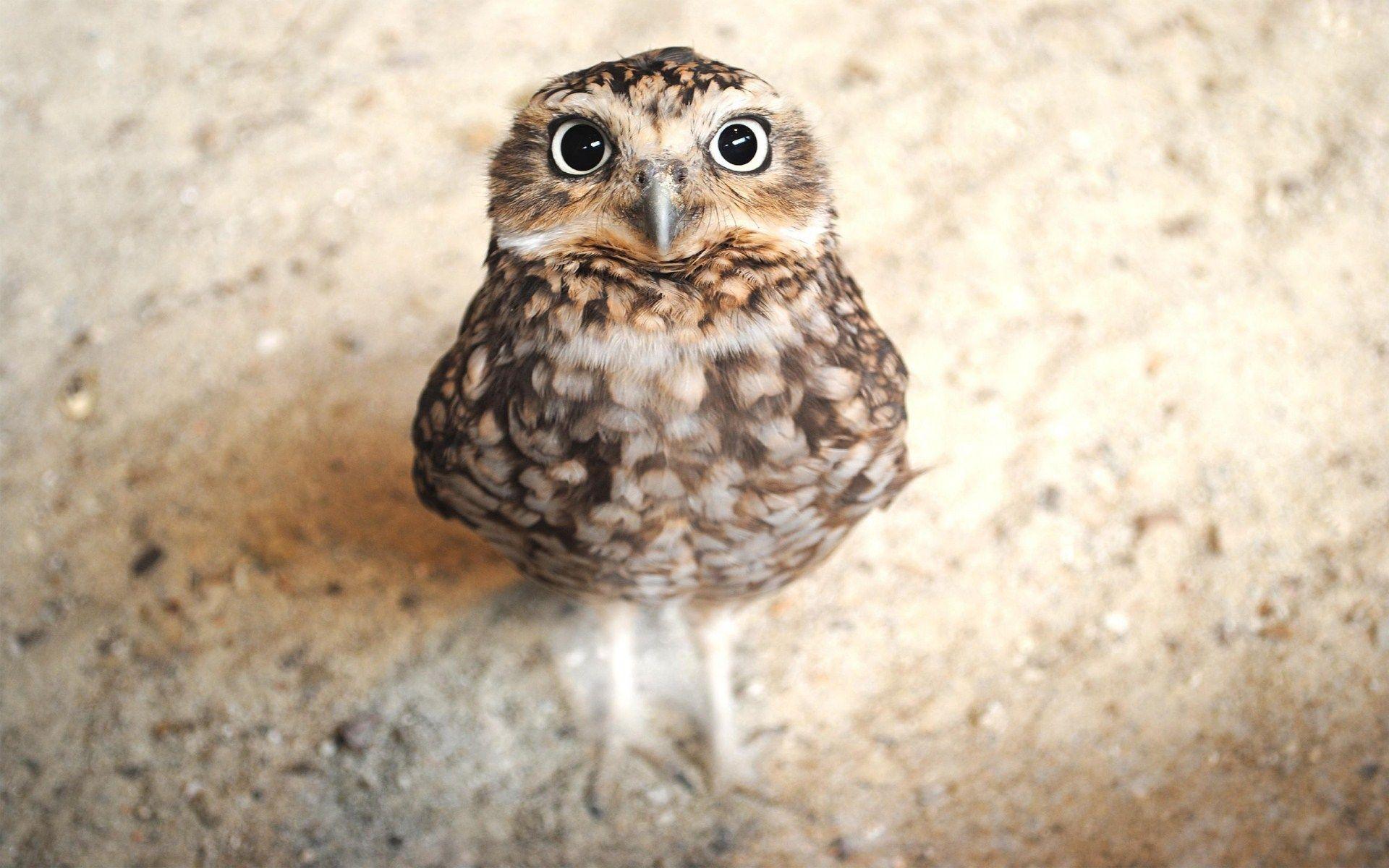 owl wallpaper for walls