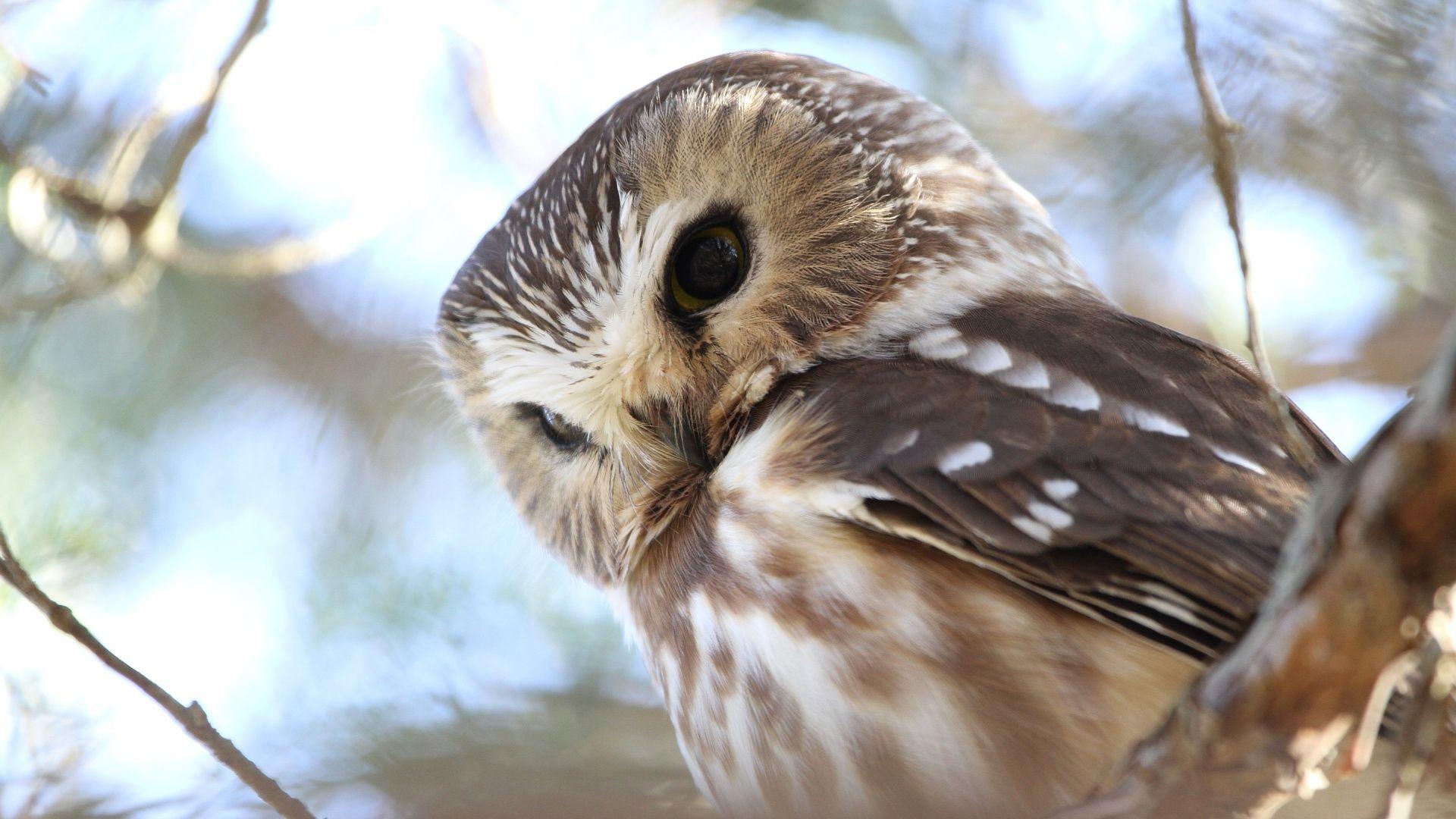 owl city iphone wallpaper