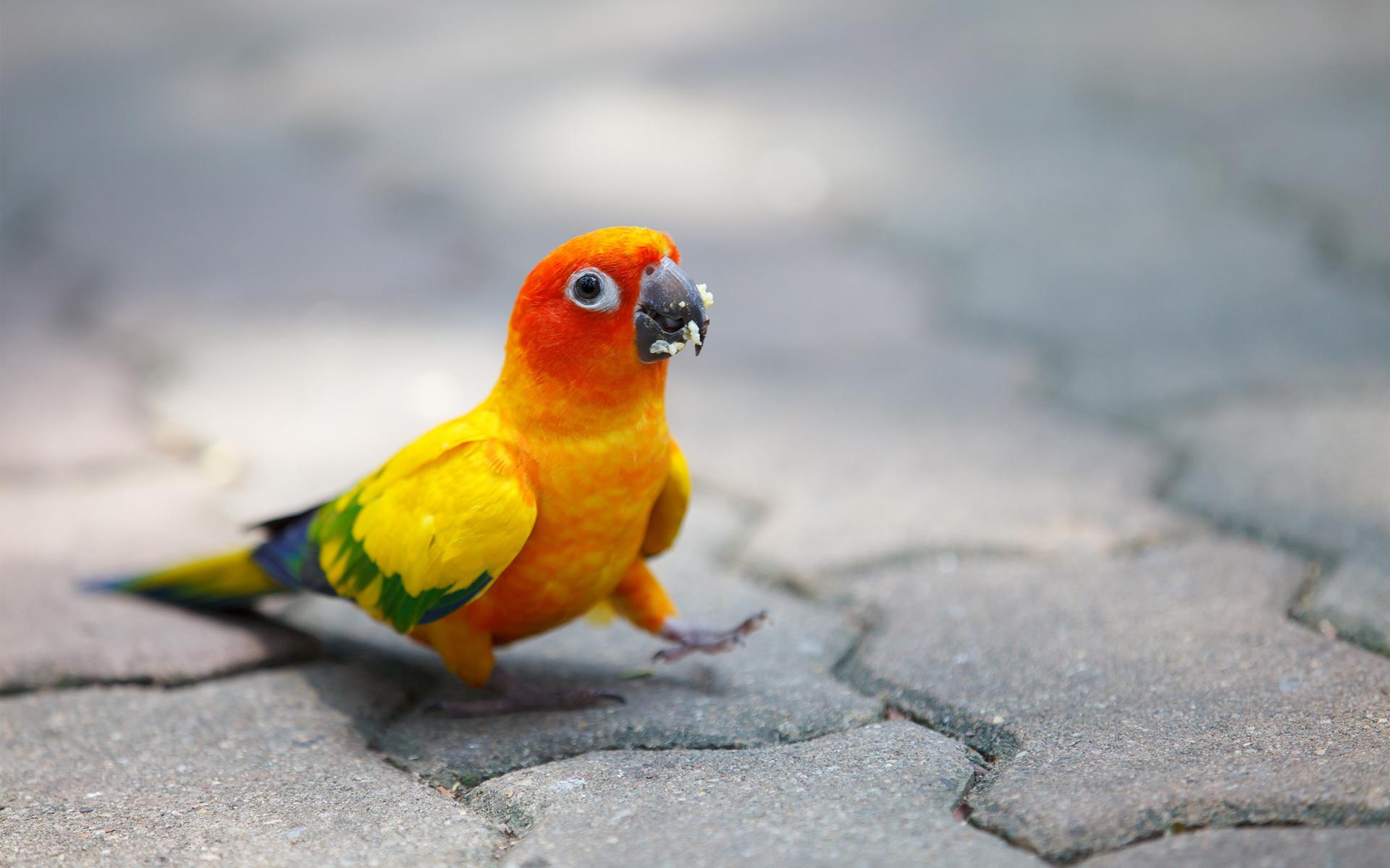 pics of parrots