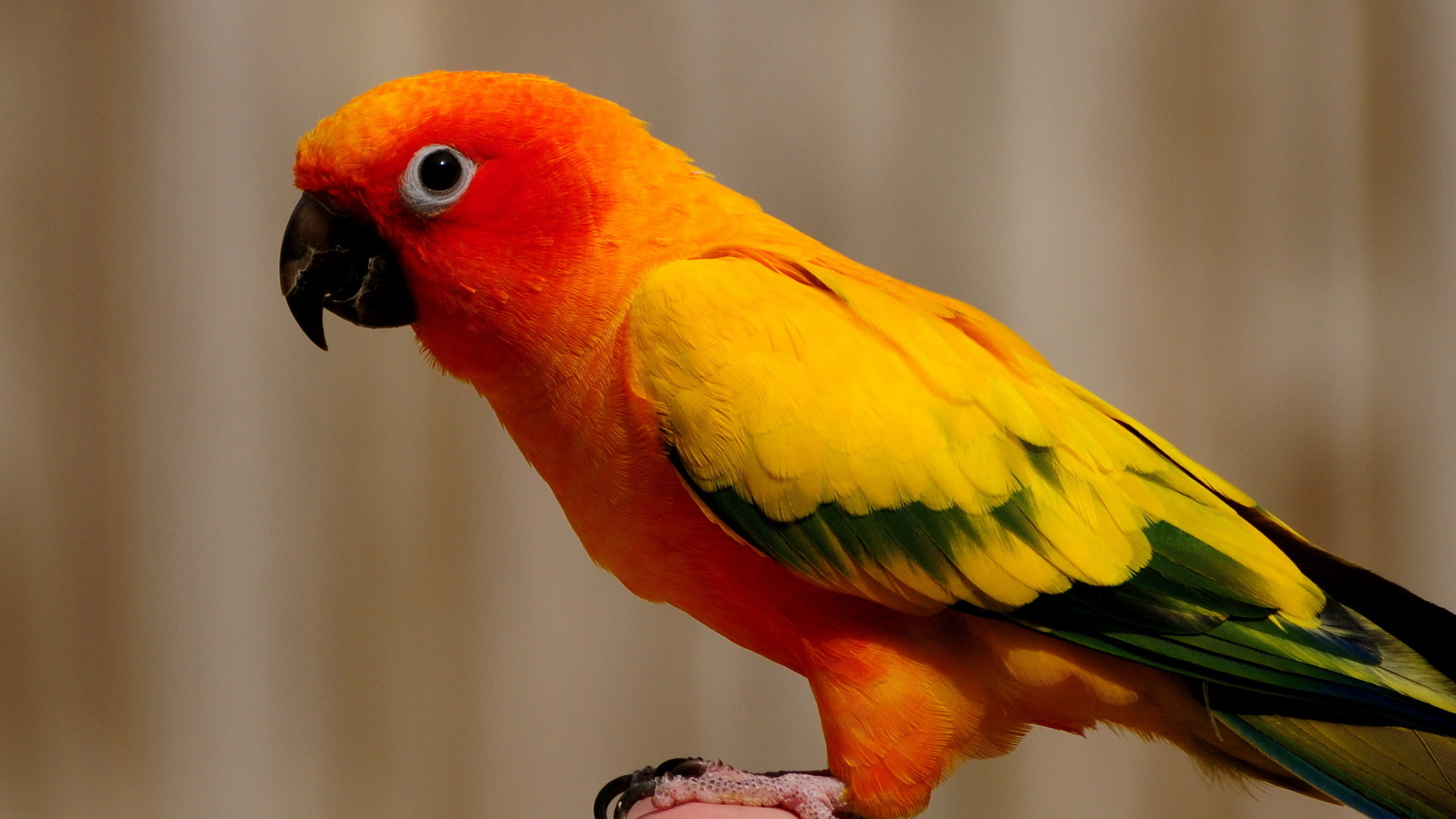 picture of parrot hd