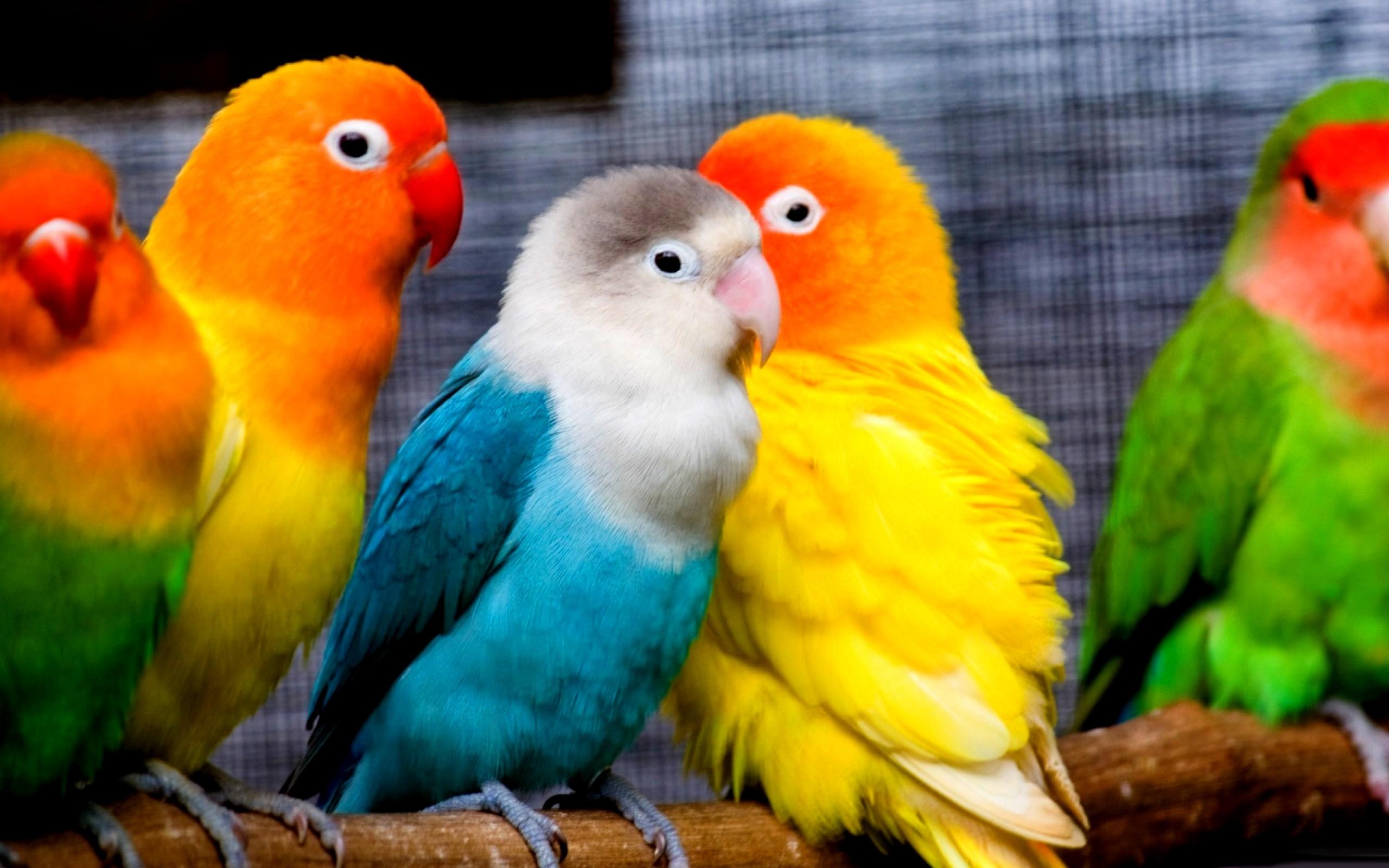 parrot photo download