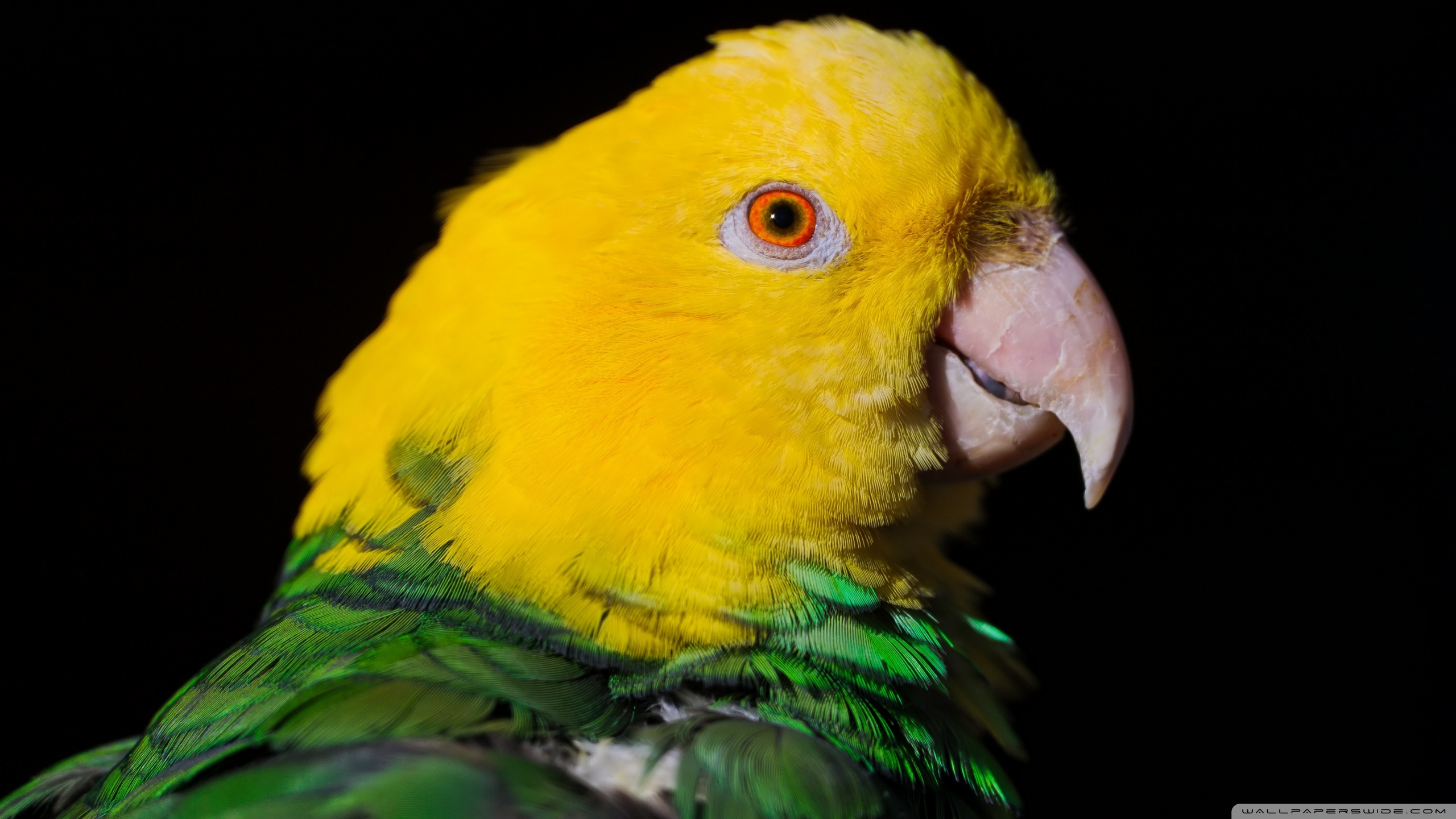 parrot picture download
