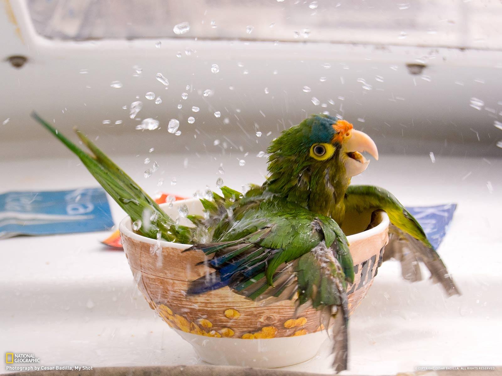 beautiful parrot images