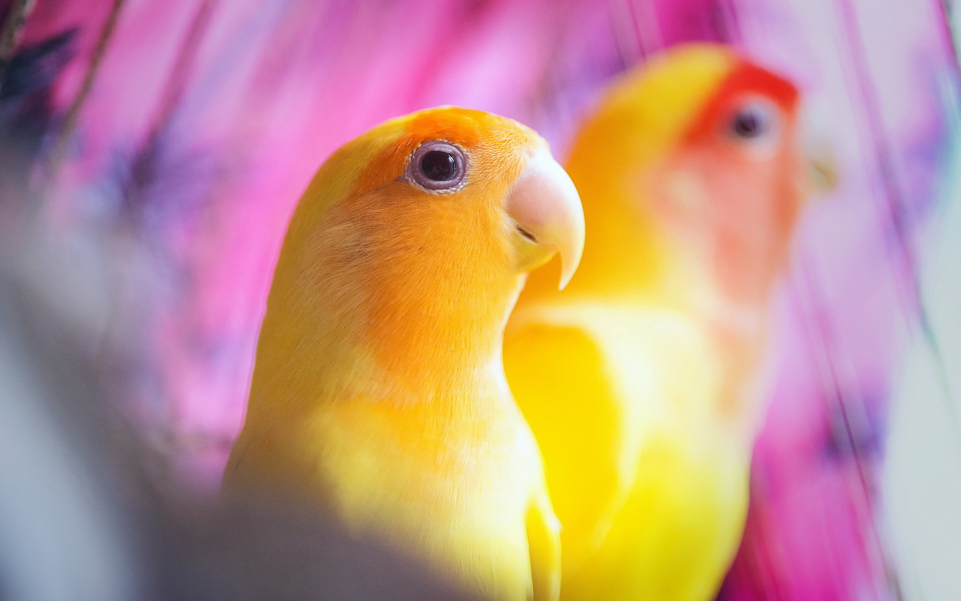parrot picture hd