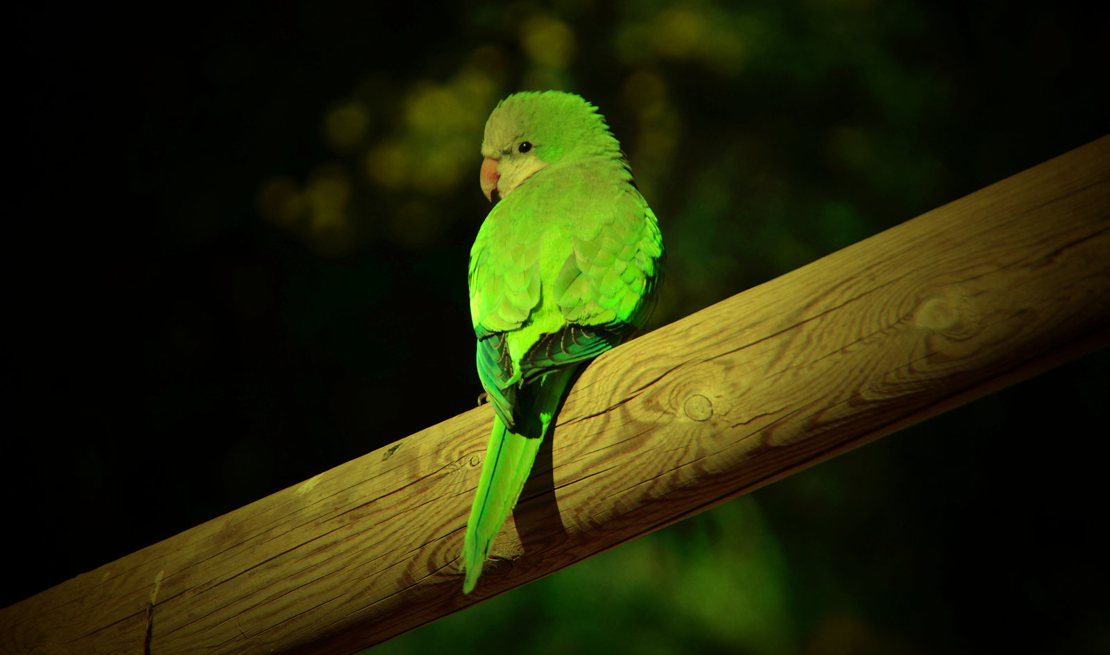 parrot photo gallery