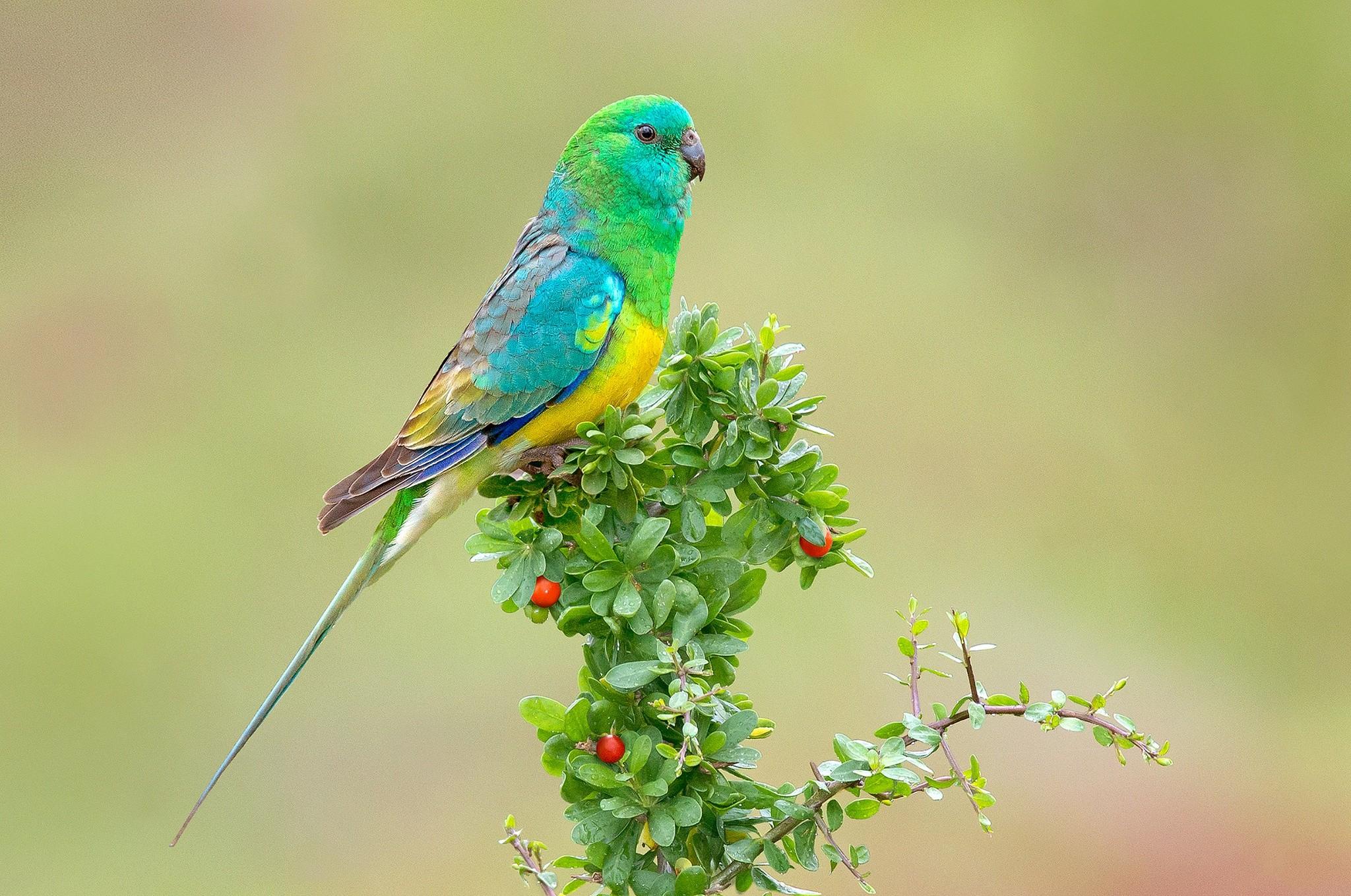 parrot images download