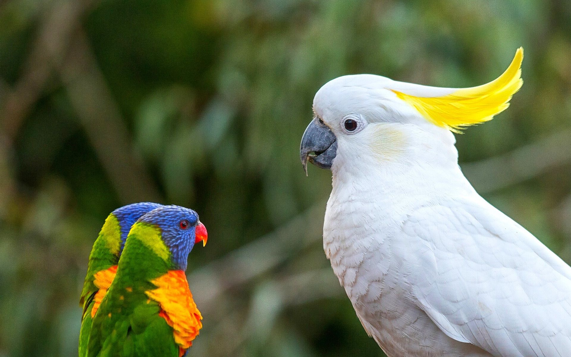 images of parrot bird