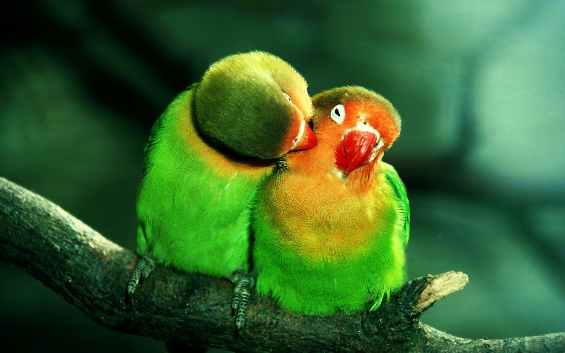 parrot photos hd