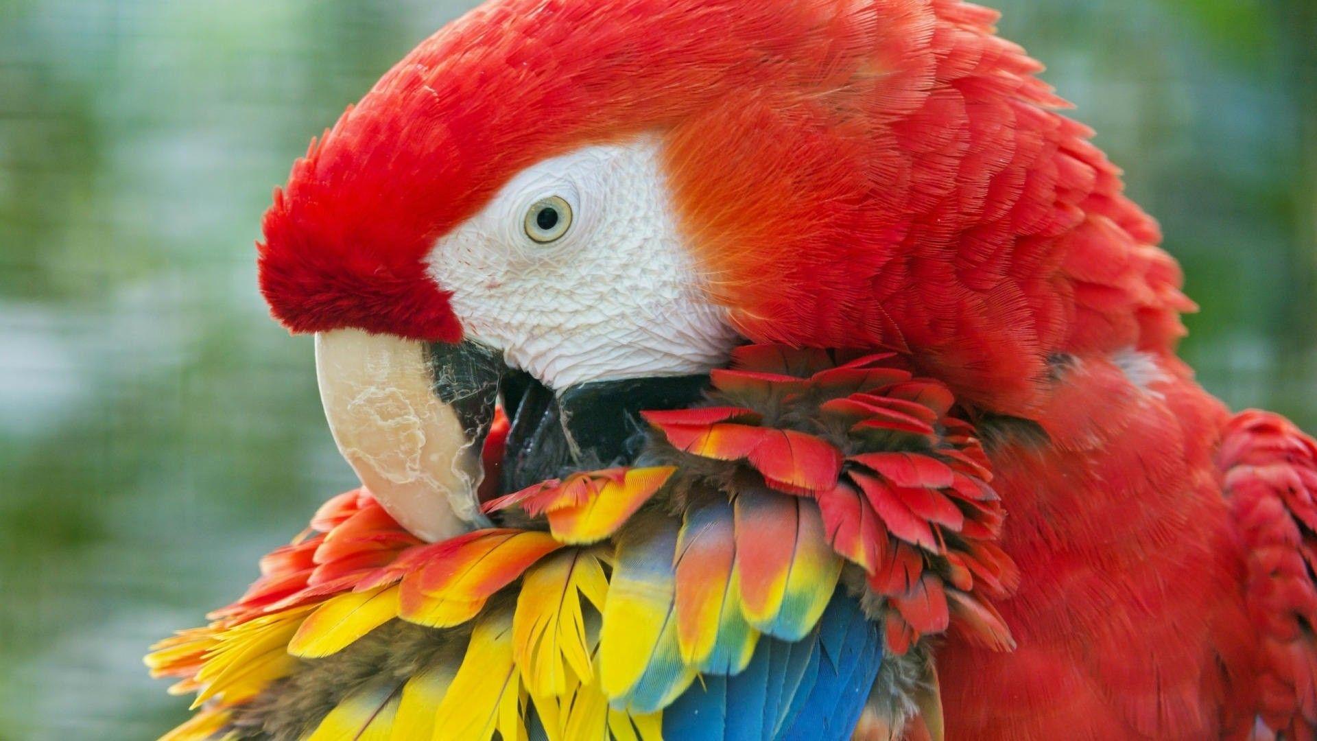 beautiful parrots images download
