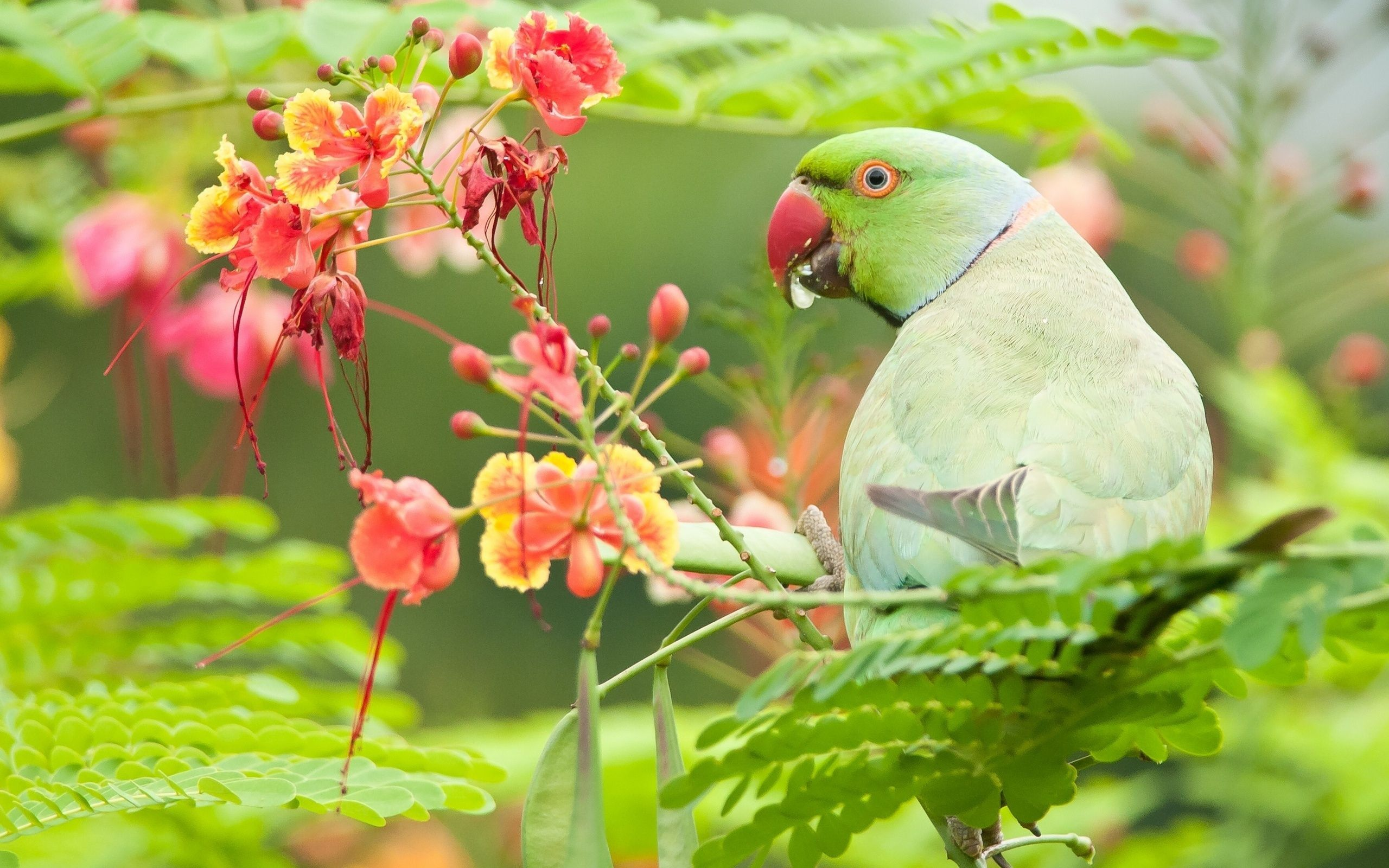 perot bird photo