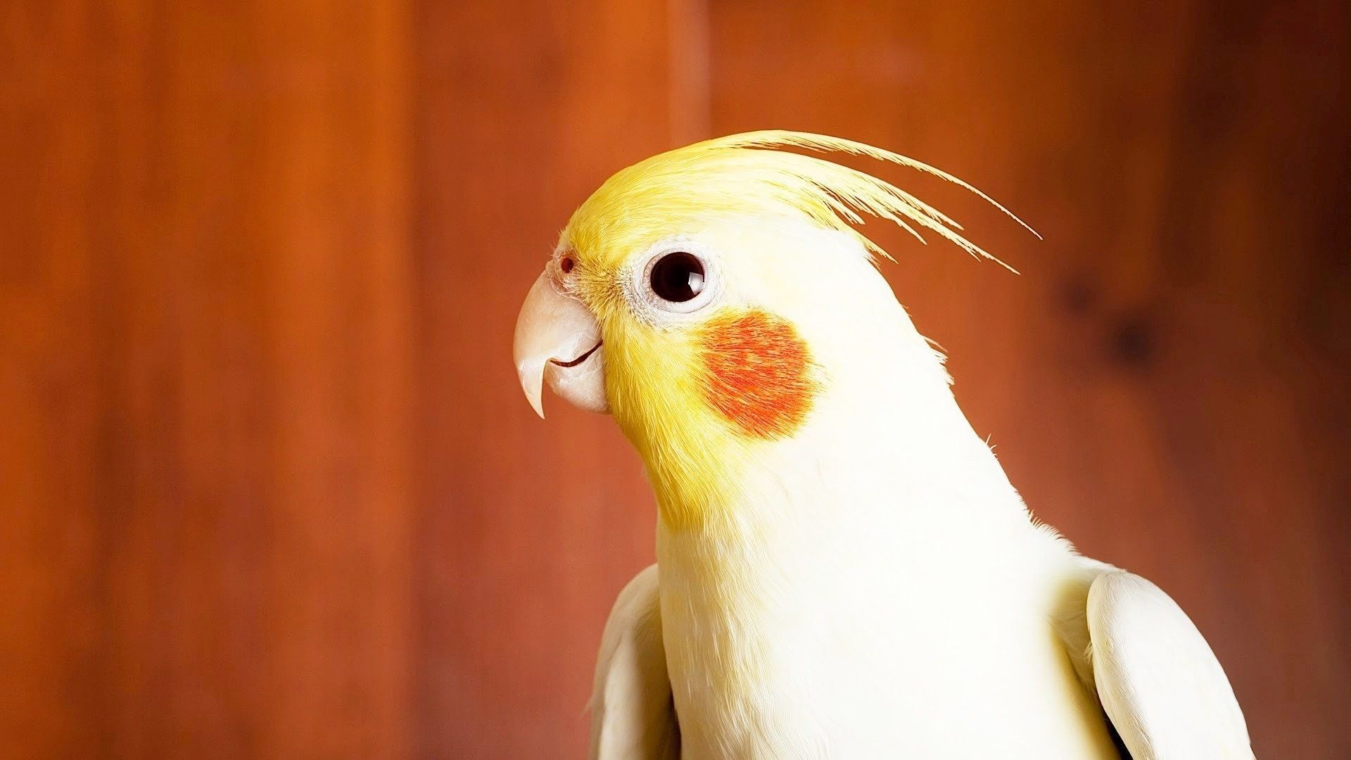 parrot hd images
