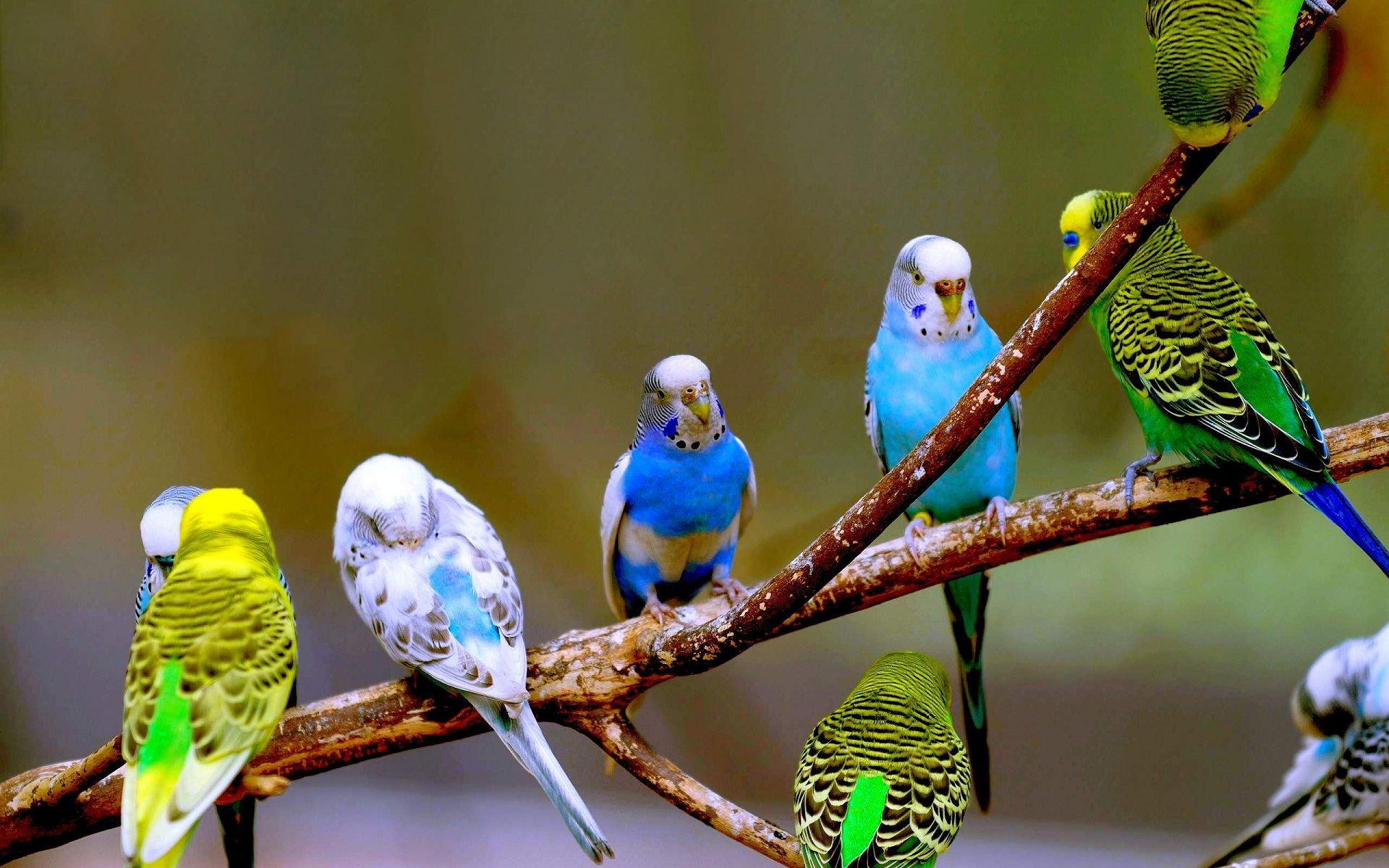 picture of parrot bird hd