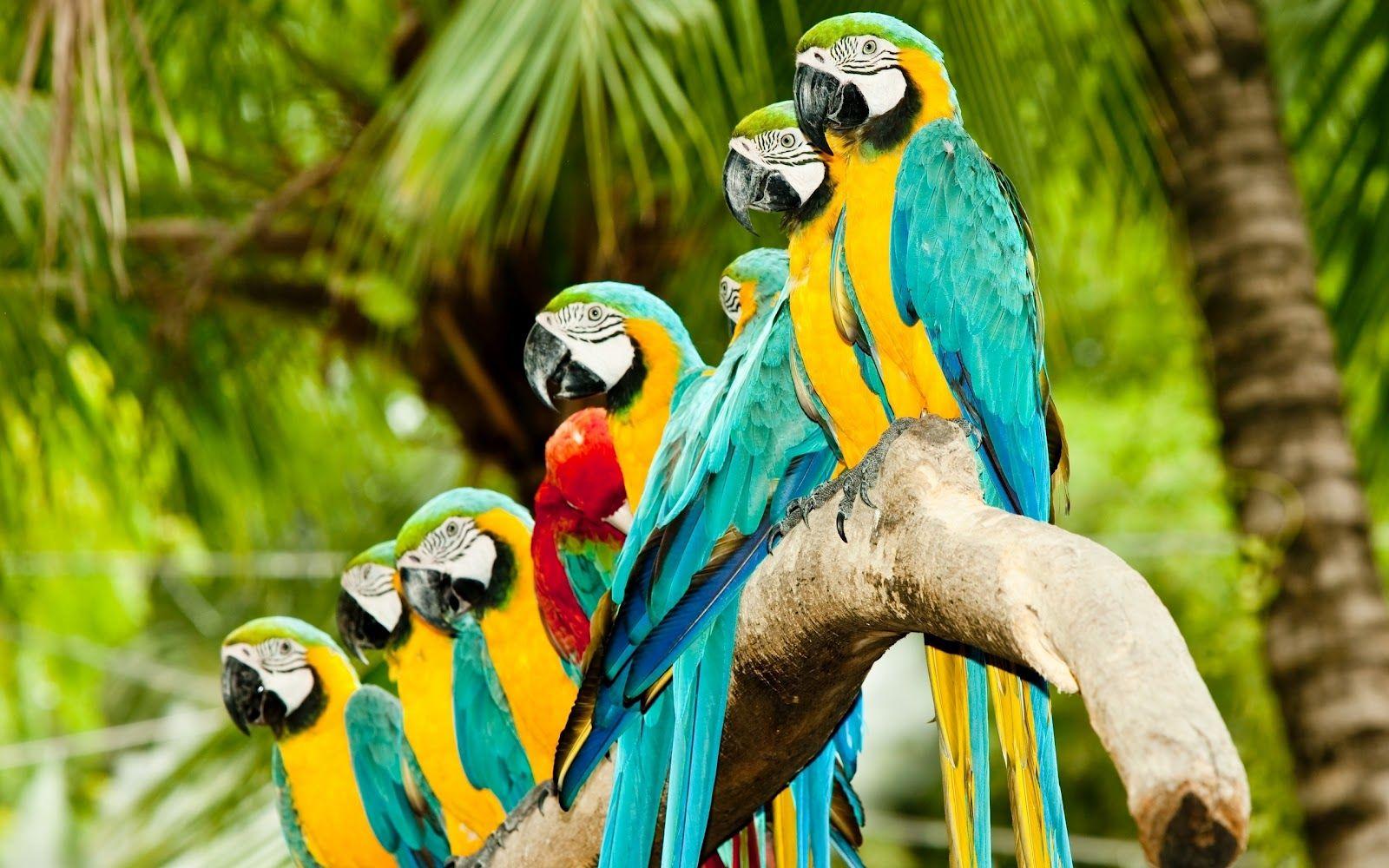 birds wallpaper download free