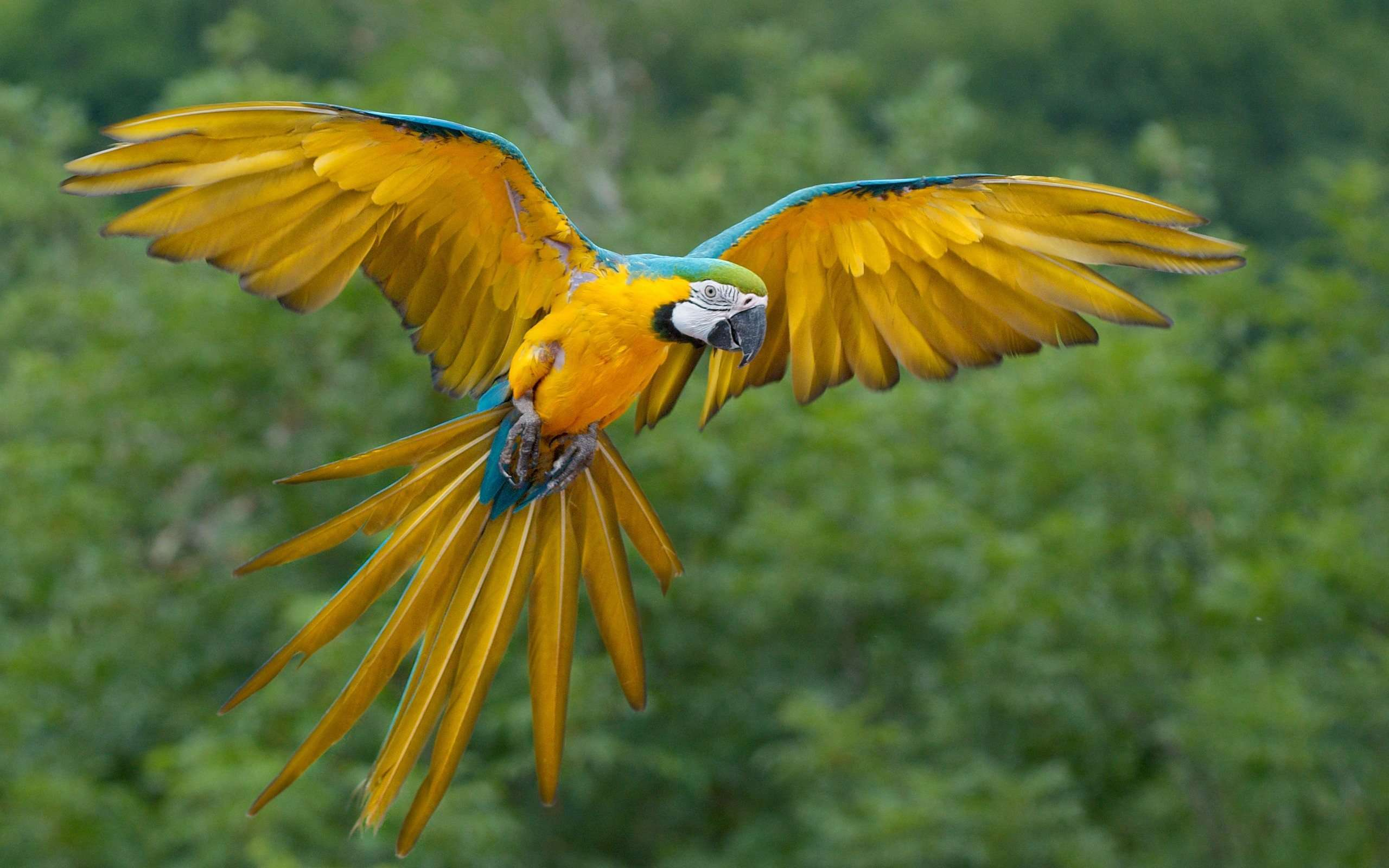 parrot download