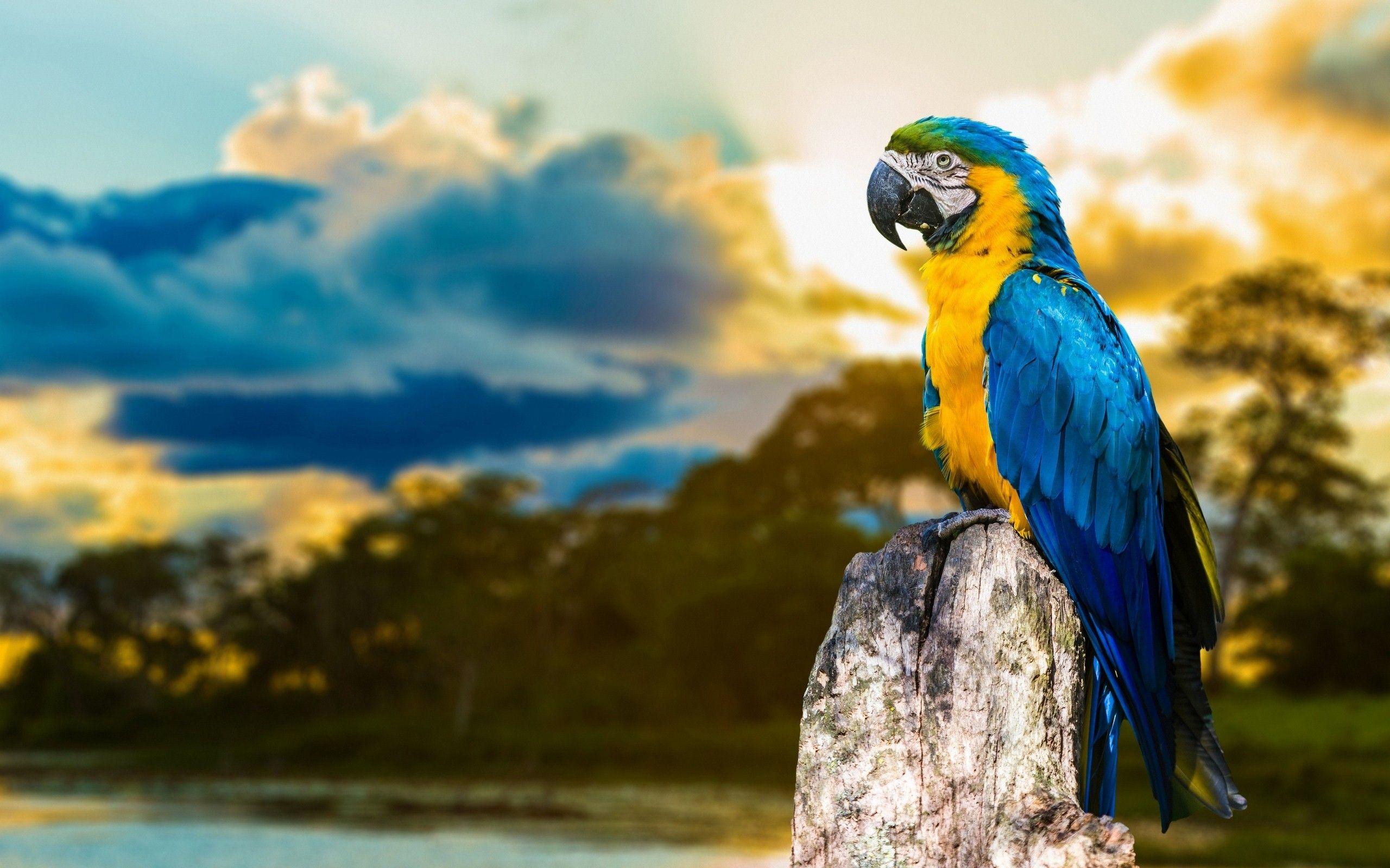 www parrot image