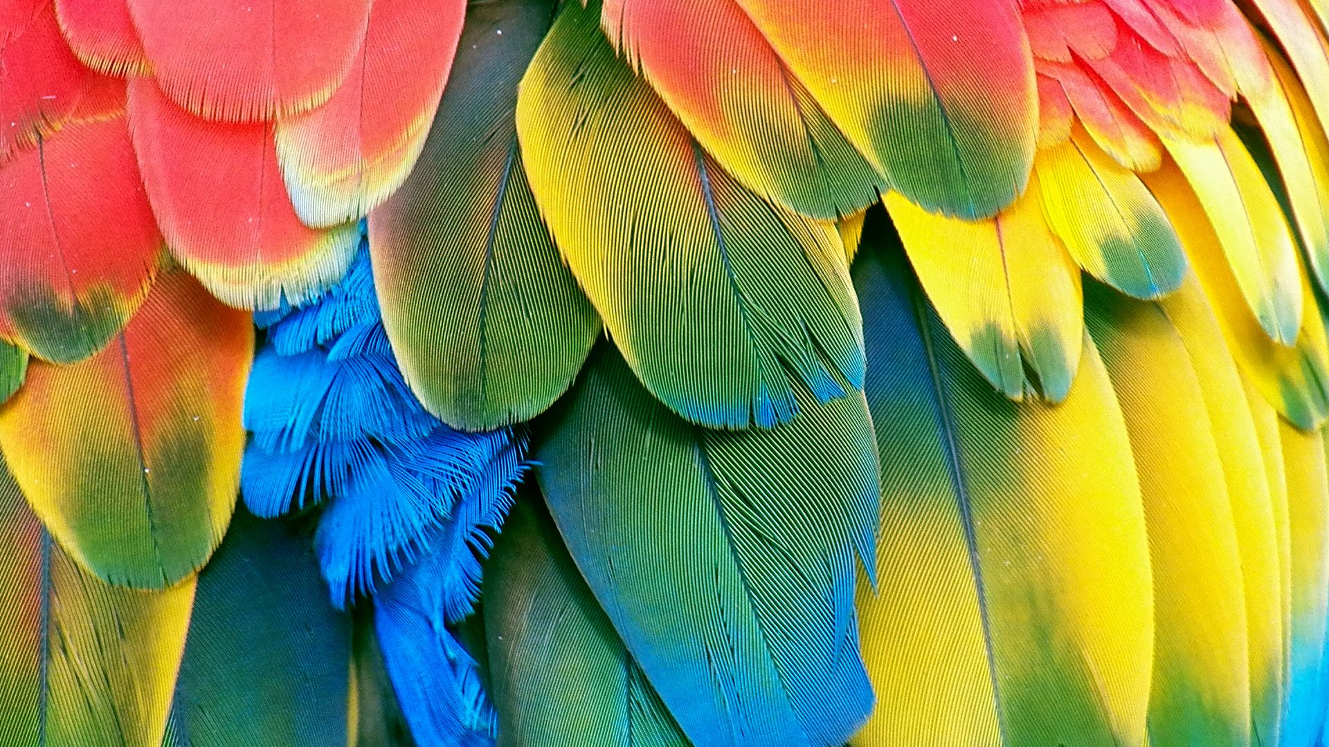 hd parrot wallpapers